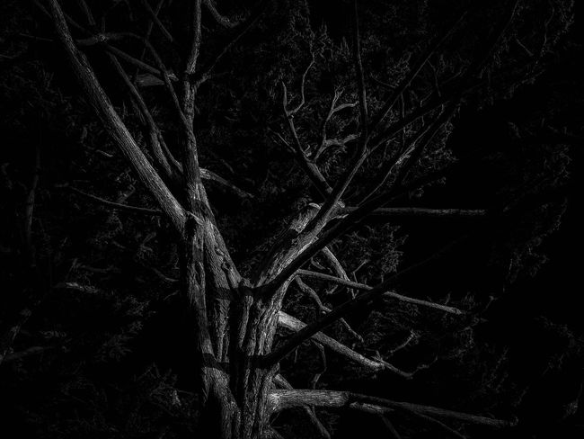 Wicked (Part III) Blackandwhite Eye4photography  Creative Light And Shadow Taking Photos Tree Light And Shadow Monochrome Composition Nature Nature_collection Atmospheric Mood Outdoors Night EyeEm Best Shots EyeEm Nature Lover Exceptional Photographs Beauty In Nature Abstract Scenics Trees Beauty In Nature Dark Moody Sky EyeEm Gallery EyeEm Best Edits