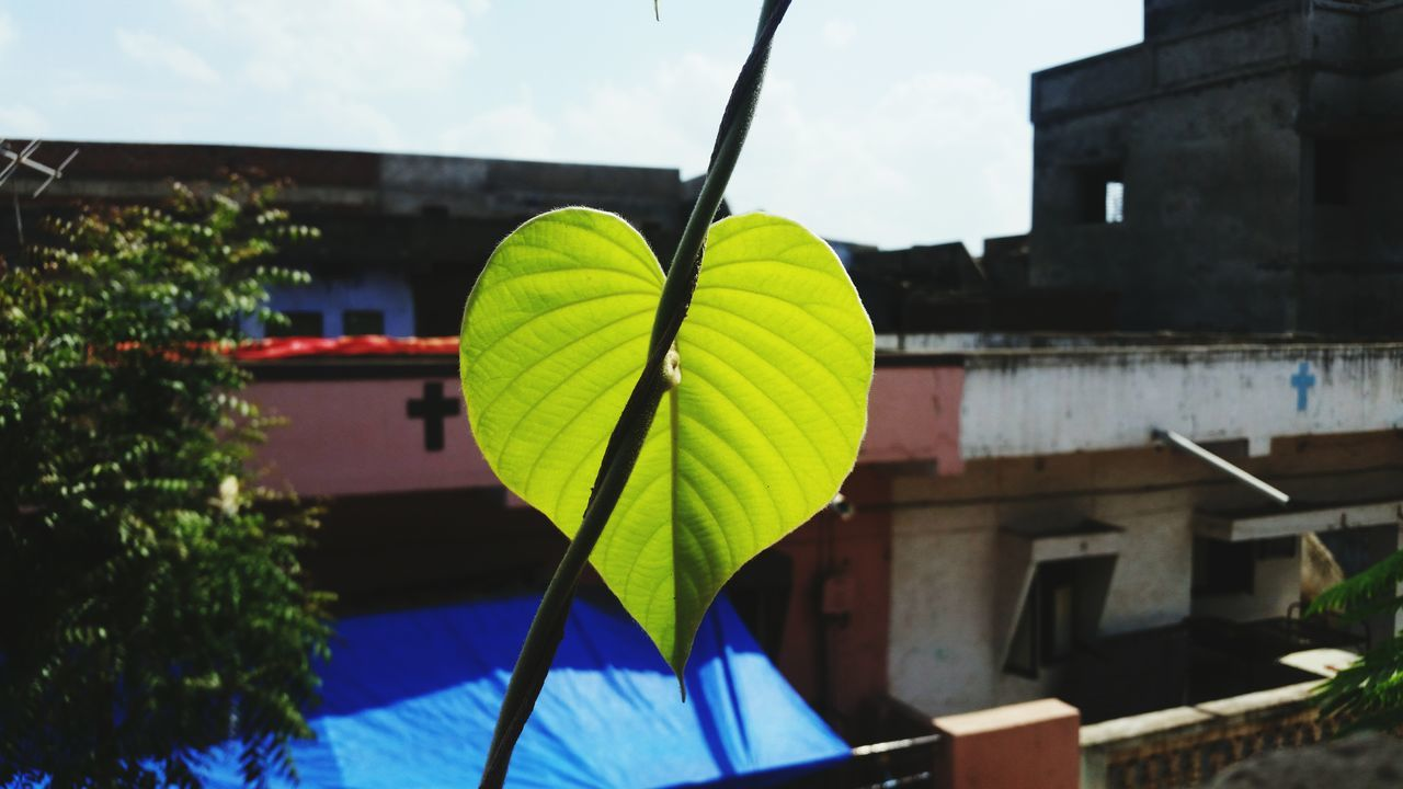 Leaf in a heart or heart in a Leaf! Leaf Sky Growth Green Color Outdoors Day India Eye4photography  EyeEm Gallery Eyevision. Eyevision Everyday Life EyeEm Vision Eyem Vision Dark Window Eyem Best Shots Fun Enjoying Eyemvision Everyday EyeEm Nature Lover Event Naturelover