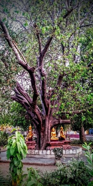 Temples And Shrines Pagodas Birma Burma Myanmar Burmese Culture Buddhist Temple Trees Golden Forest Golden Buddhas Layering Four Buddahs Praying Bagan Area Bagan The Great Outdoors With Adobe Holy Tree Tree Of Life The Great Outdoors - 2016 EyeEm Awards Golden Moments