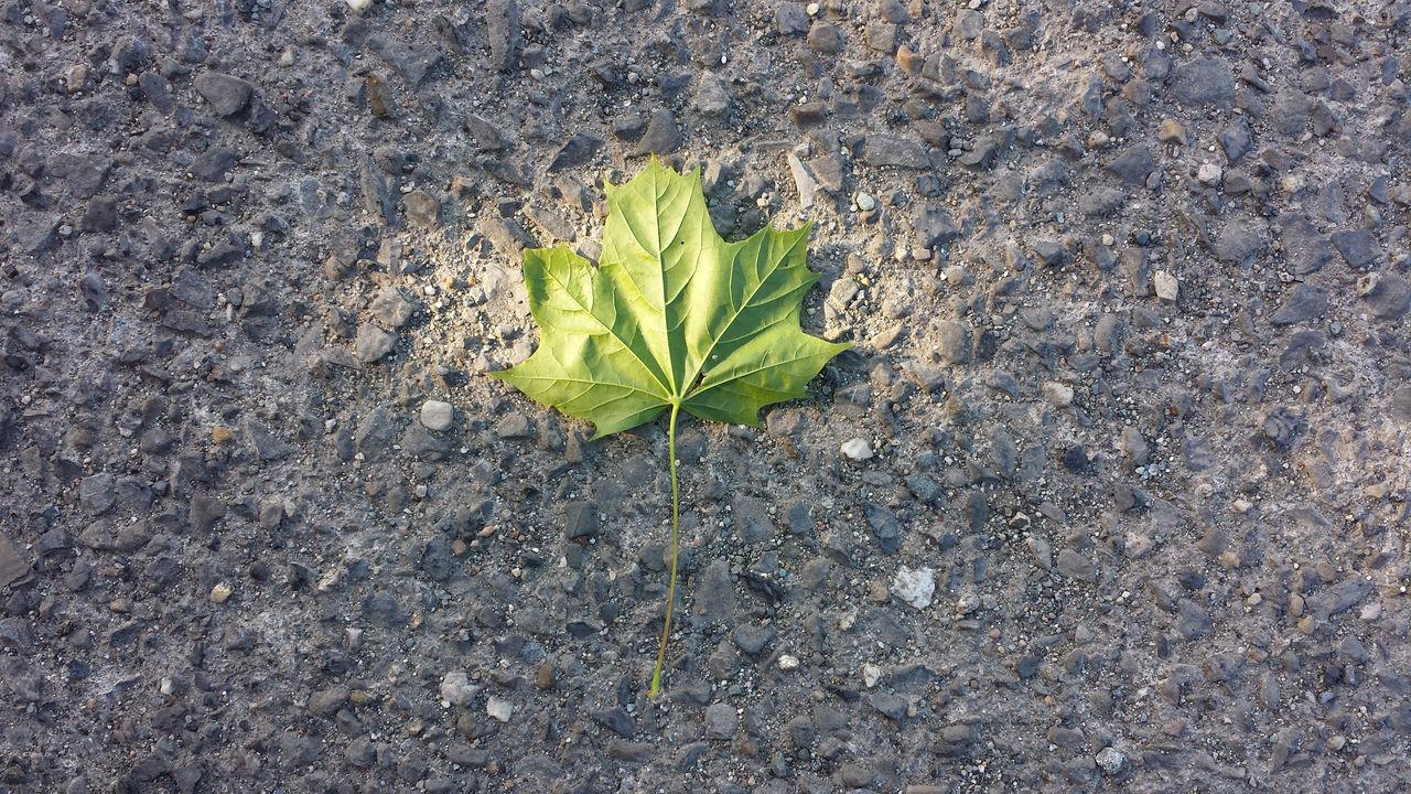 Beautiful stock photos of leaf, Close-Up, Fragility, Freshness, Ground