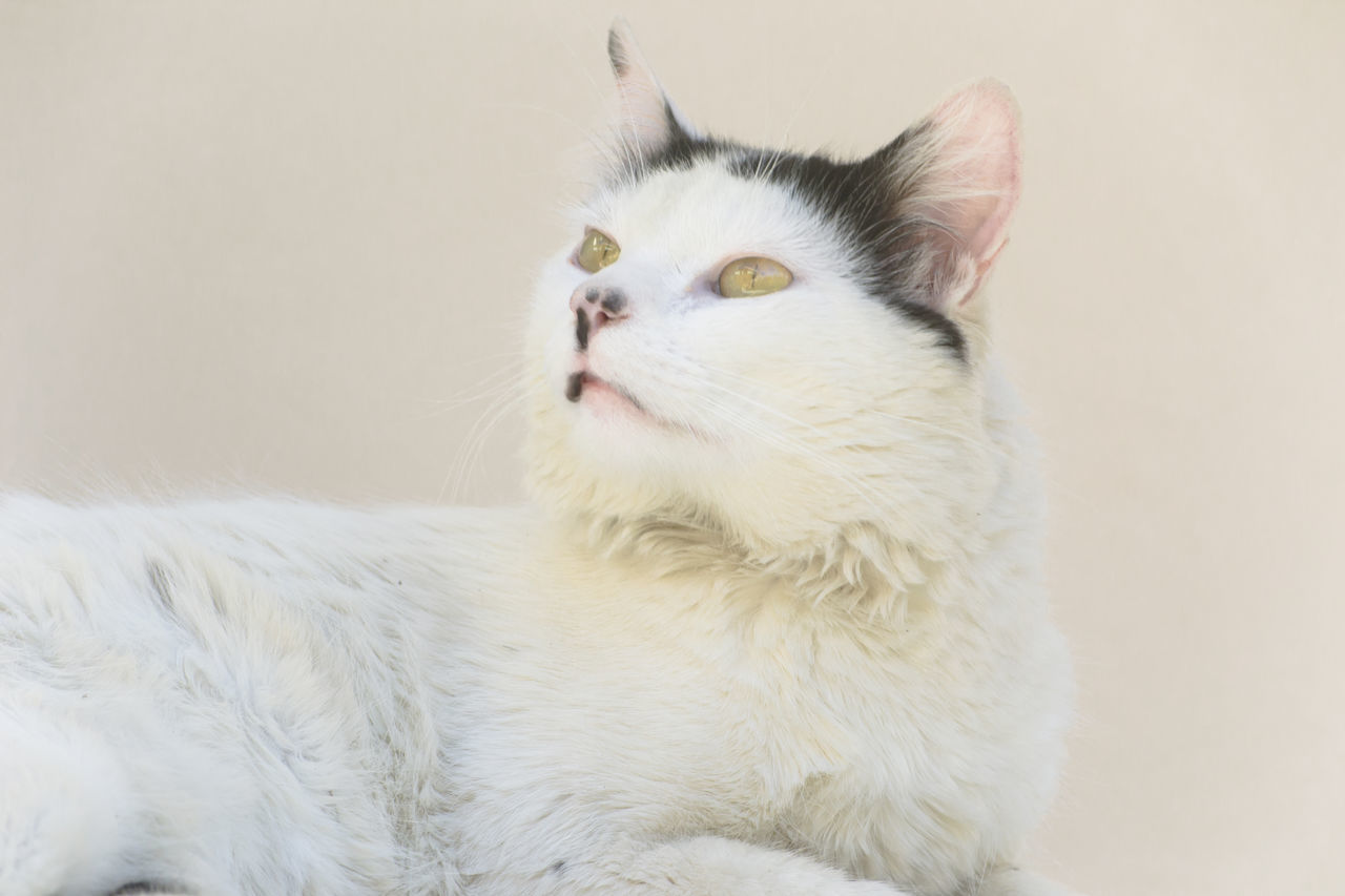Beautiful stock photos of baby katzen, animal themes, one animal, mammal, domestic cat