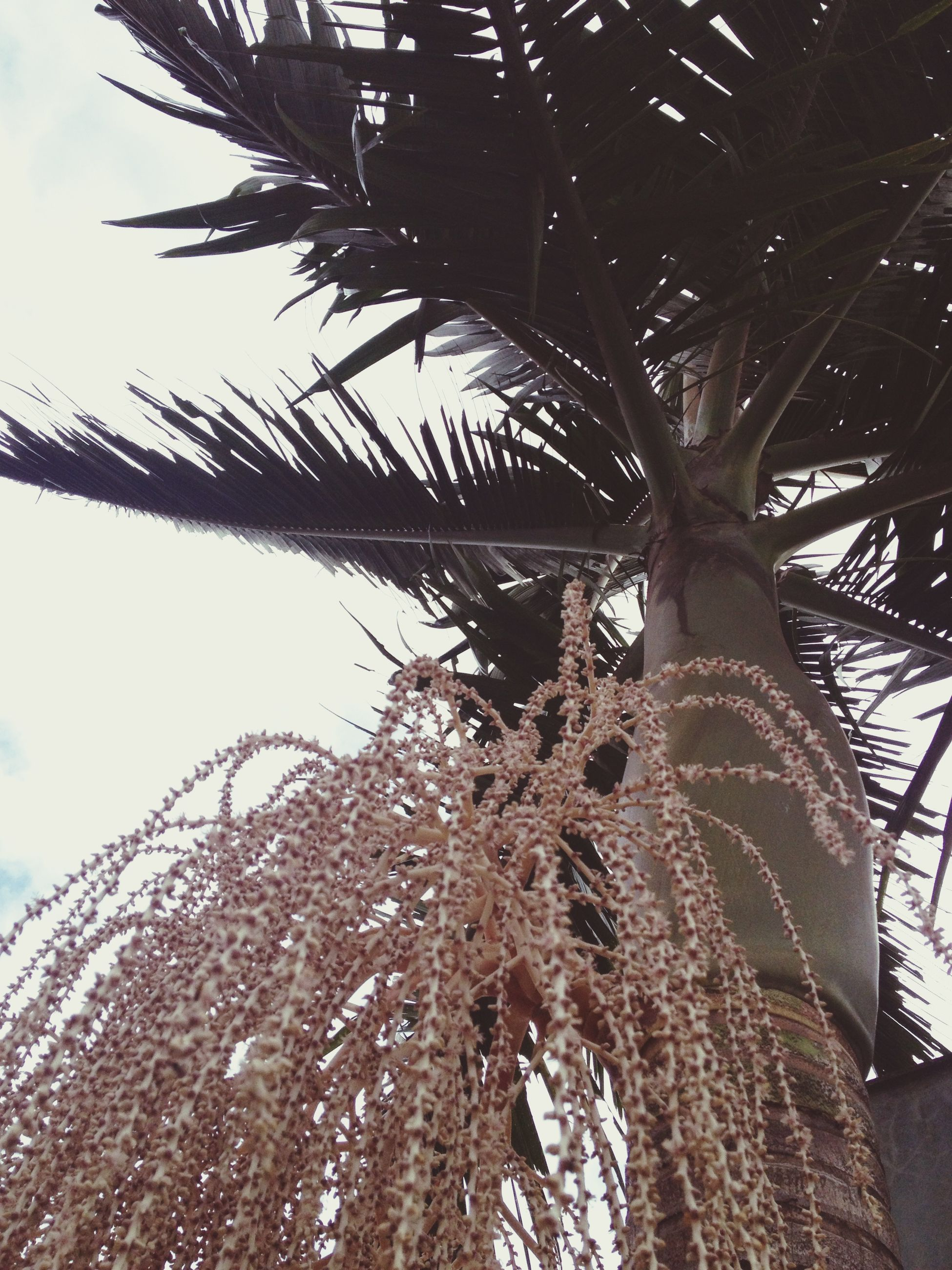 low angle view, tree, built structure, sky, architecture, branch, tree trunk, day, growth, sunlight, nature, outdoors, no people, clear sky, tall - high, palm tree, building exterior, tilt, leaf, tranquility