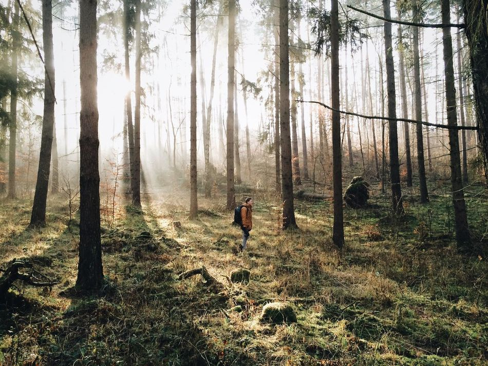 Beautiful stock photos of camping, Adventure, Beauty In Nature, Day, Forest