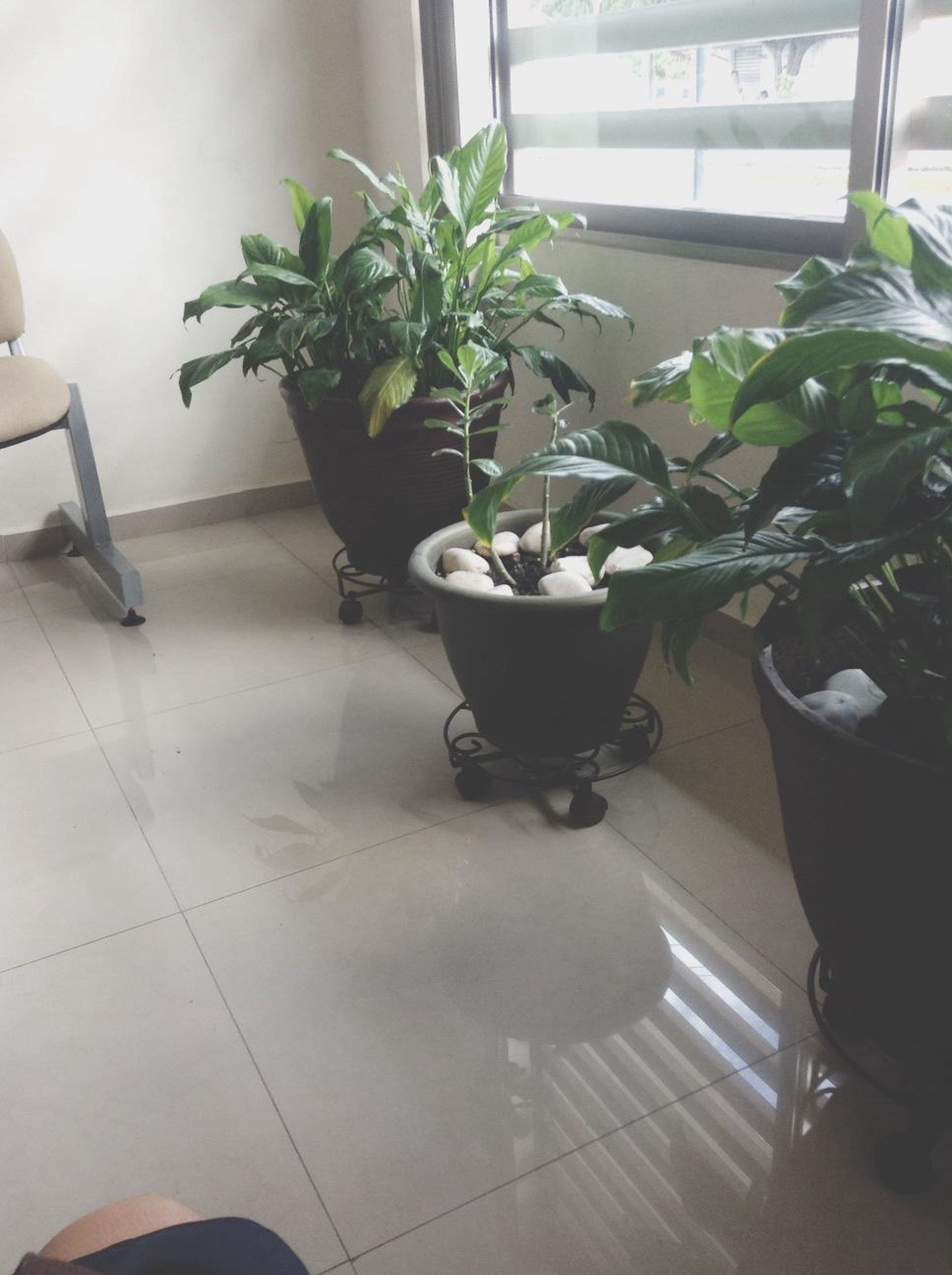 indoors, potted plant, table, chair, plant, tiled floor, home interior, flooring, growth, vase, window, pot plant, high angle view, flower pot, sunlight, domestic room, green color, floor, absence, leaf