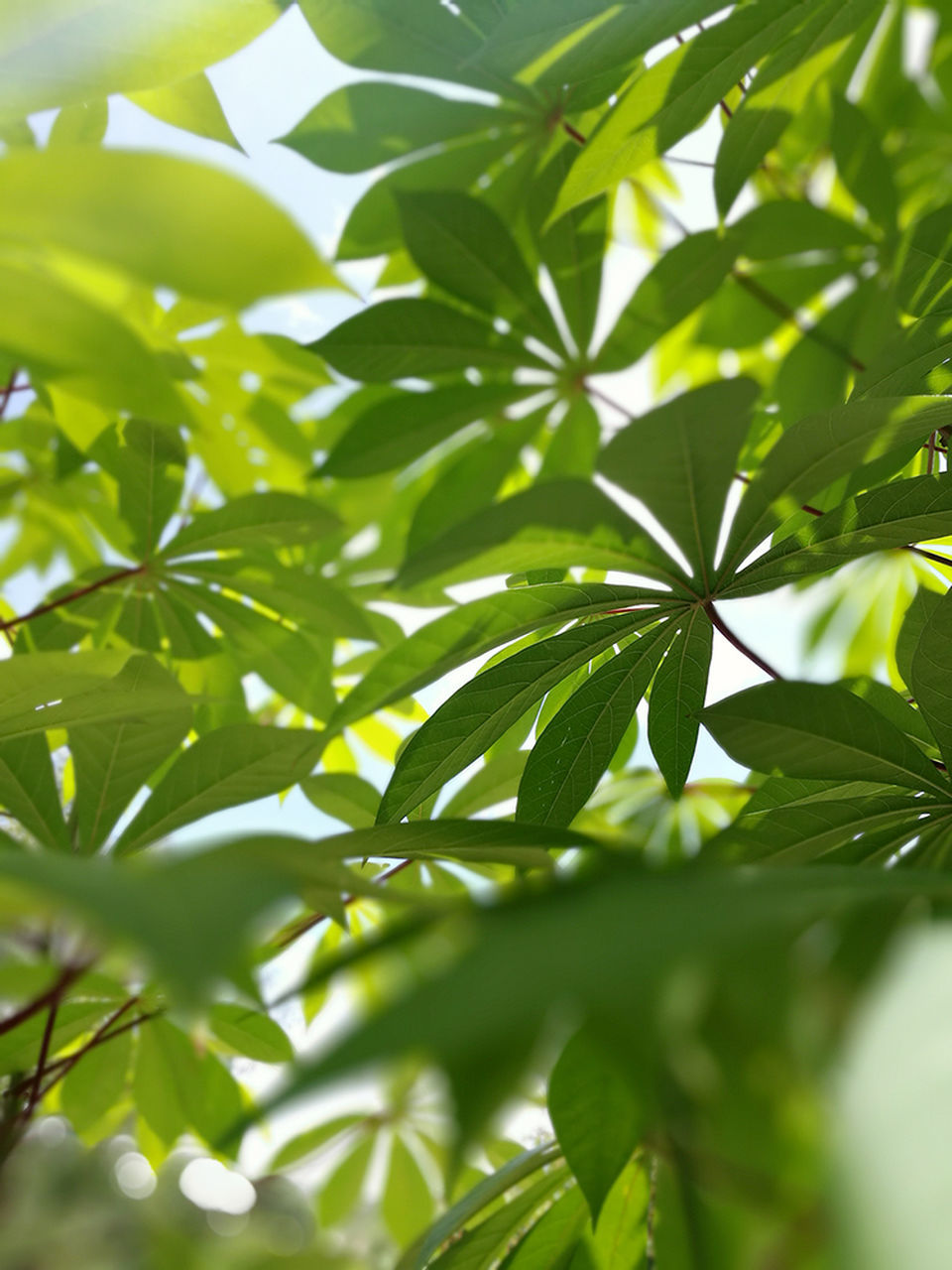 leaf, green color, growth, plant, nature, close-up, tree, day, outdoors, no people, beauty in nature, branch, freshness