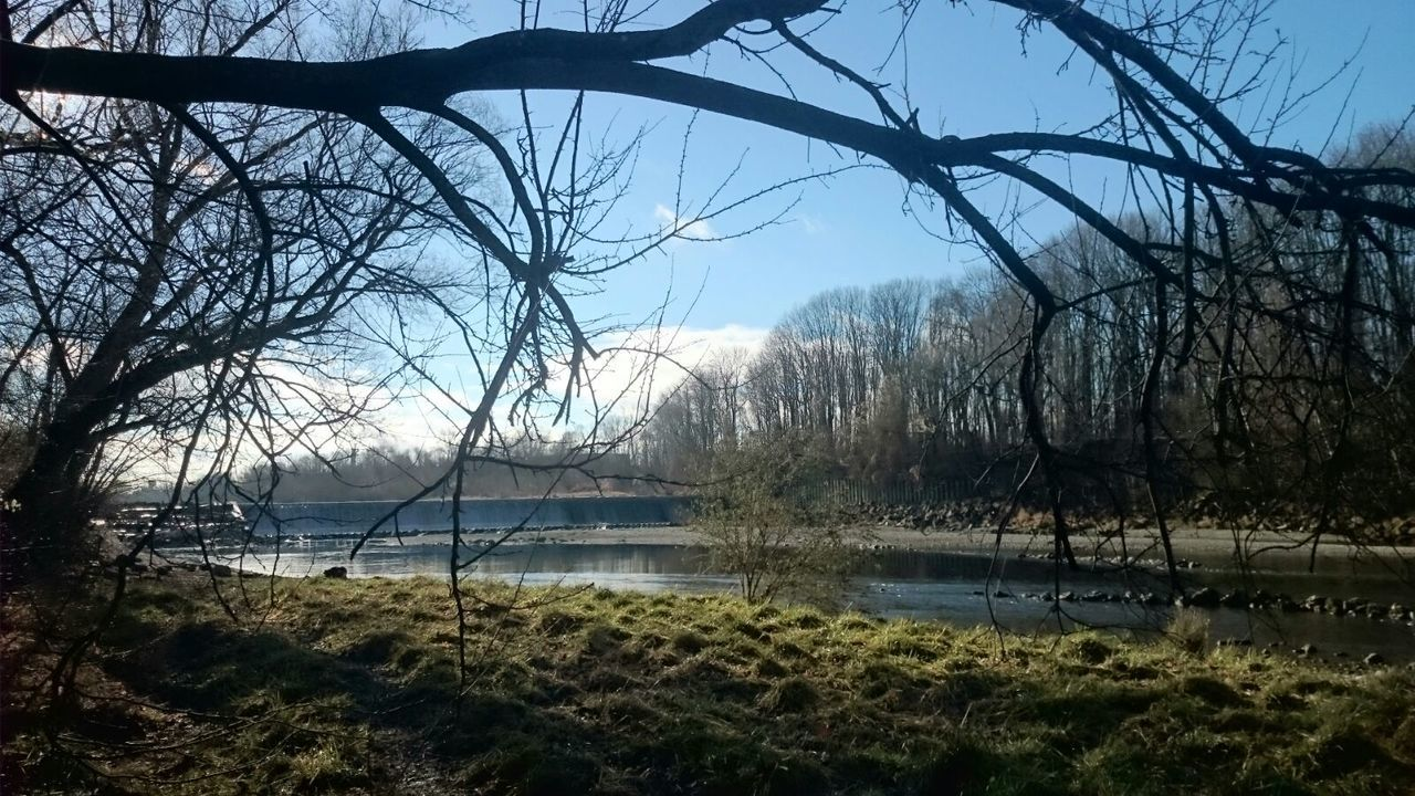 water, tree, lake, nature, beauty in nature, tranquil scene, bare tree, scenics, tranquility, no people, outdoors, sky, day, grass, branch, landscape, built structure, architecture