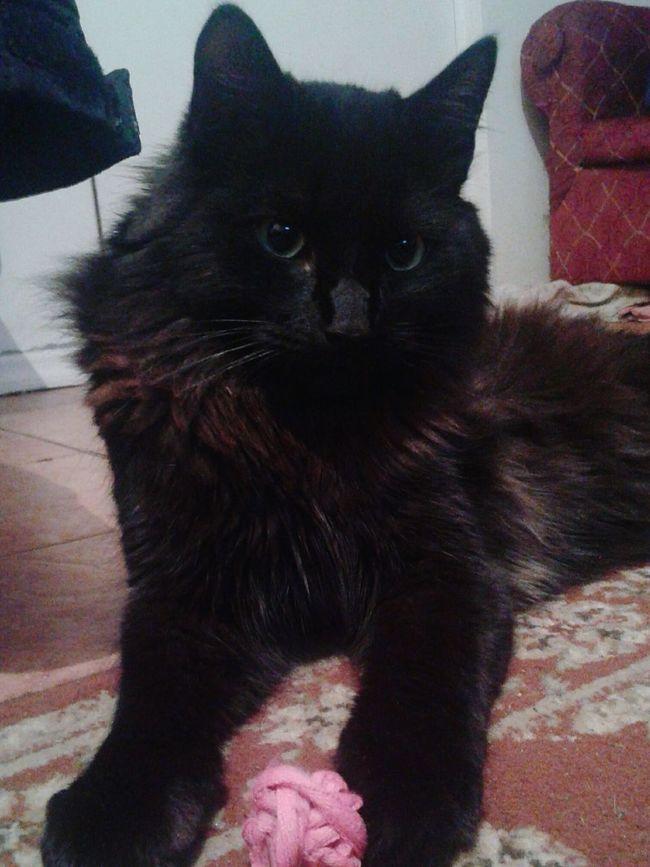 Mi gordito hermoso 🐱 Hi! Goog Cat♡ Likeforlike Like4like Likealways Follow Folowforfollow