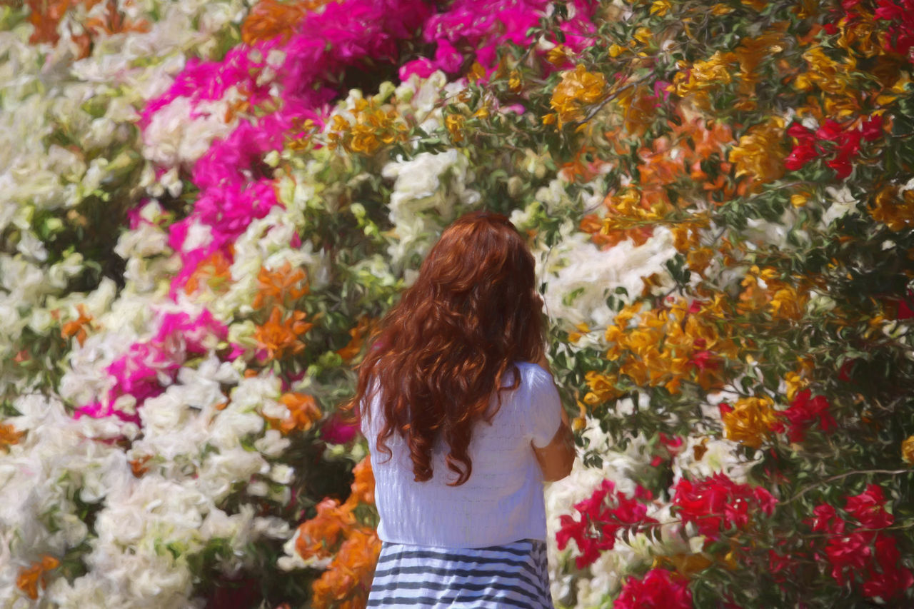 Bougainvillea Abundance Beautiful Bougainvillea Bougainvillea Flower Casual Clothing Colorful, Color, Design, Day Flower Fragility Green Headshot Leisure Activity Lifestyles Long Hair Magenta Multi Colored Nature Orange Color Plant Plants And Flowers Red Hair Wall Climbing Wall Climbing Bougainvillea Wall Climbing Plant Water
