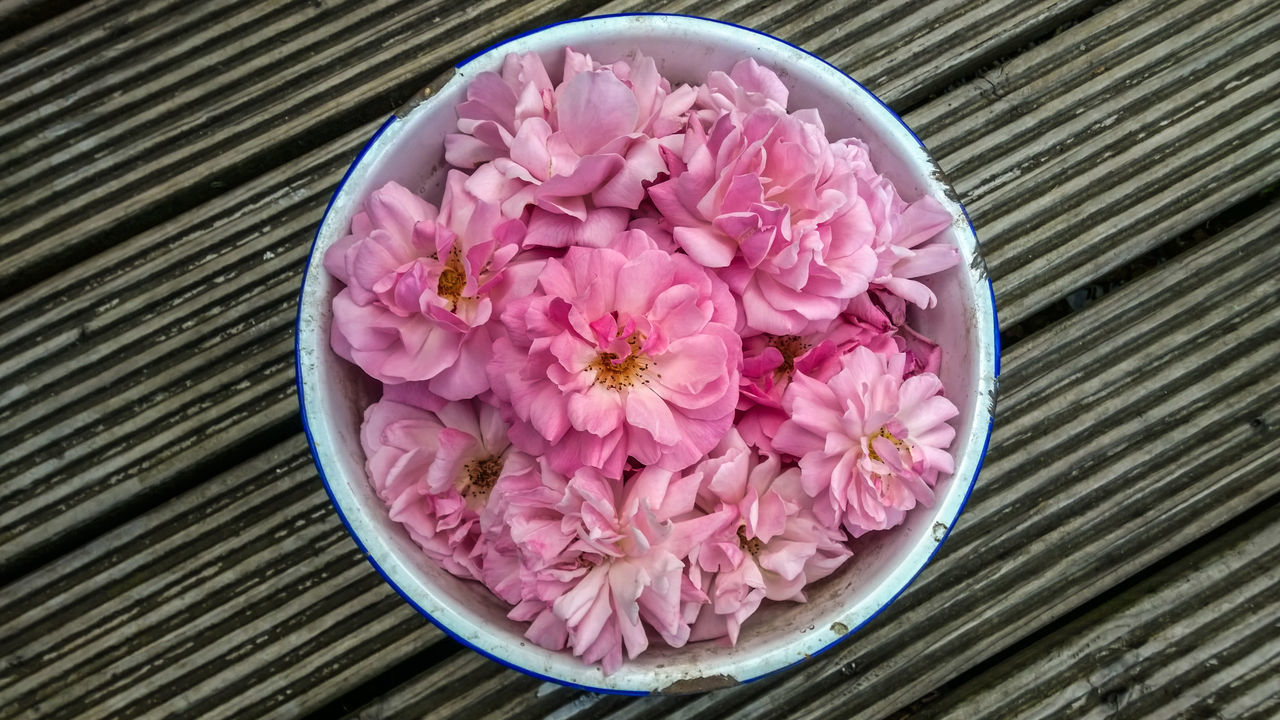 Beauty In Nature Bowl Close-up Day Enamel Cup Flower Flower Head Fragility Freshness Nature No People Outdoors Petal Pink Color Plant Rosé Wilted Flower Wilted Rose Wood - Material Wood Planks