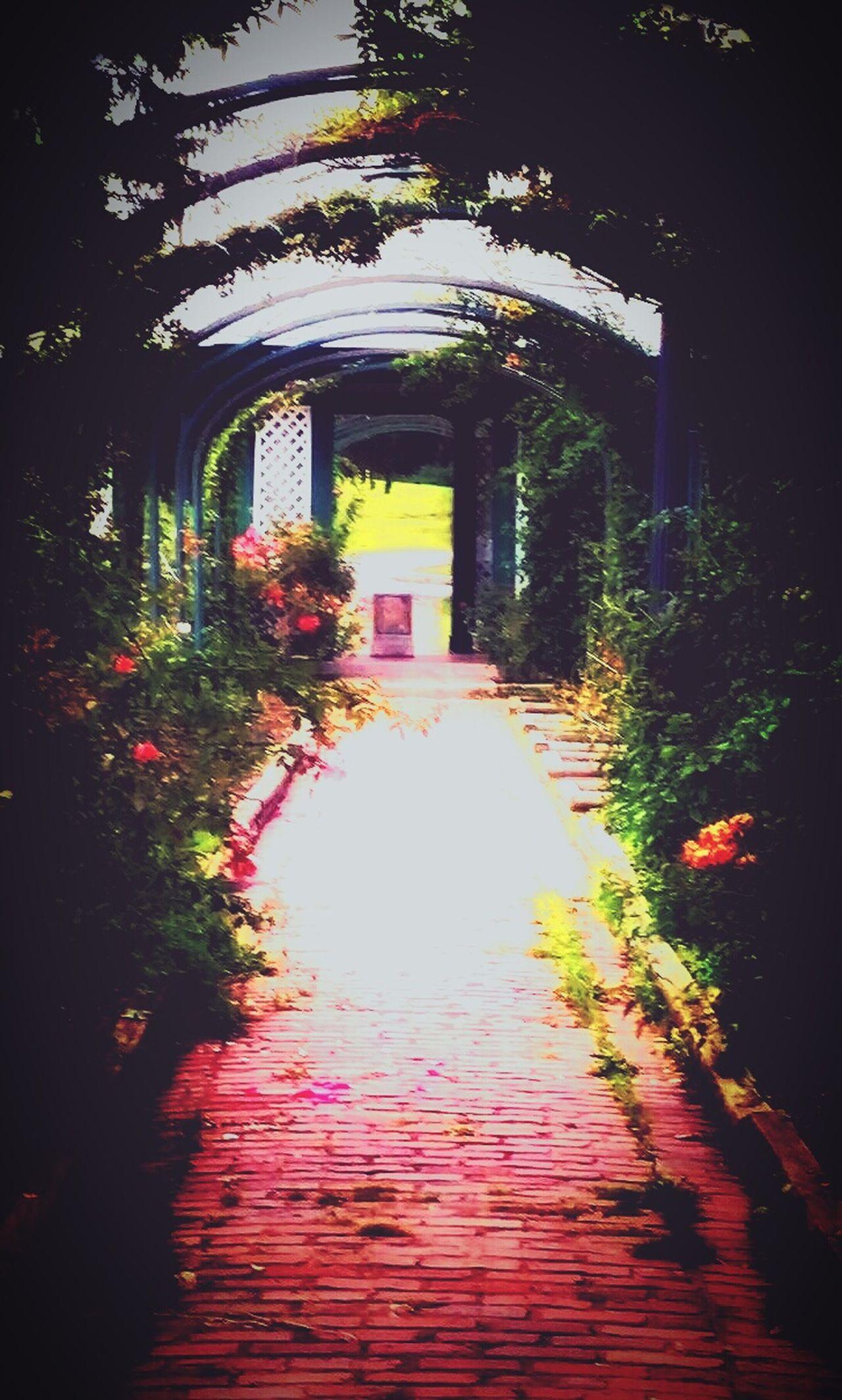 Rose Gardens Tunnel View Rose🌹 Taking Photos Enjoying Life