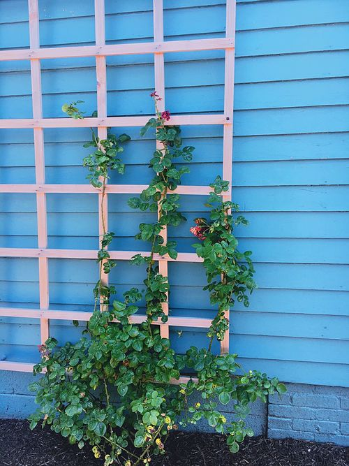New Jersey Flowers Beauty Nature Fence Outdoors Blue