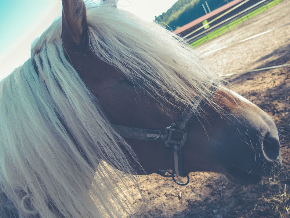 Animal Body Part Close-up Day Equine Equinephotography Fishing Net Horse Horses No People Outdoors