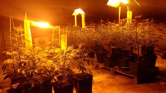 Check This Out Healthcareclub Legal Grow For Our Patients Taking Photos Check This Out New Grows Enjoying Life Women Who Inspire You Thc Healthcare ThisIsWhatWeDo Cheese! Back Ganjagod Cannabis Culture New The Things I Love Cannabiscrew