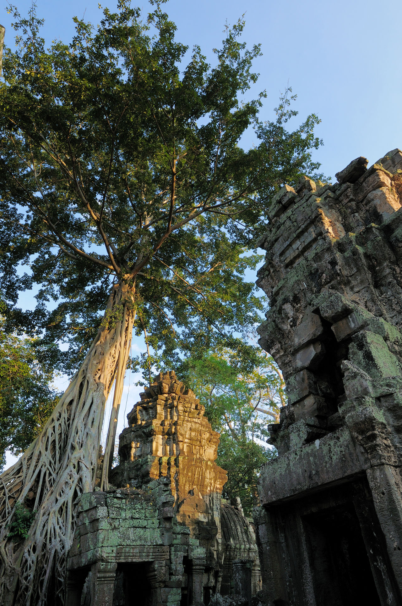 Ancient Ancient Architecture Ancient Civilization Angkor Thom Cliff Day Destruction Deterioration Eroded Famous Place Geology History Old Ruin Physical Geography Rock Rock - Object Rock Formation Rocky Rough Ruined Stone Textured  Tree Roots
