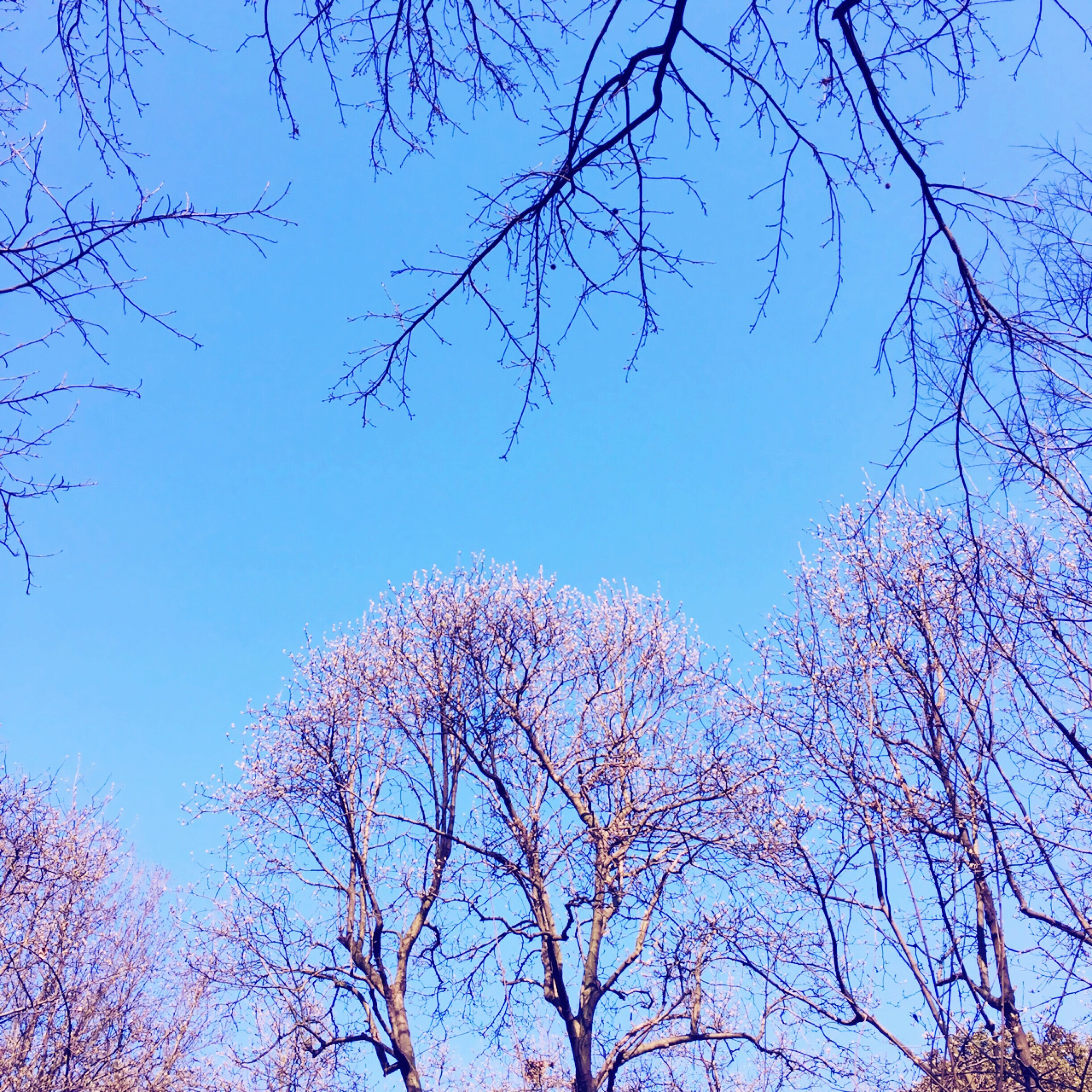branch, tree, low angle view, bare tree, clear sky, blue, beauty in nature, nature, tranquility, growth, scenics, sky, high section, autumn, outdoors, silhouette, no people, day, season, twig