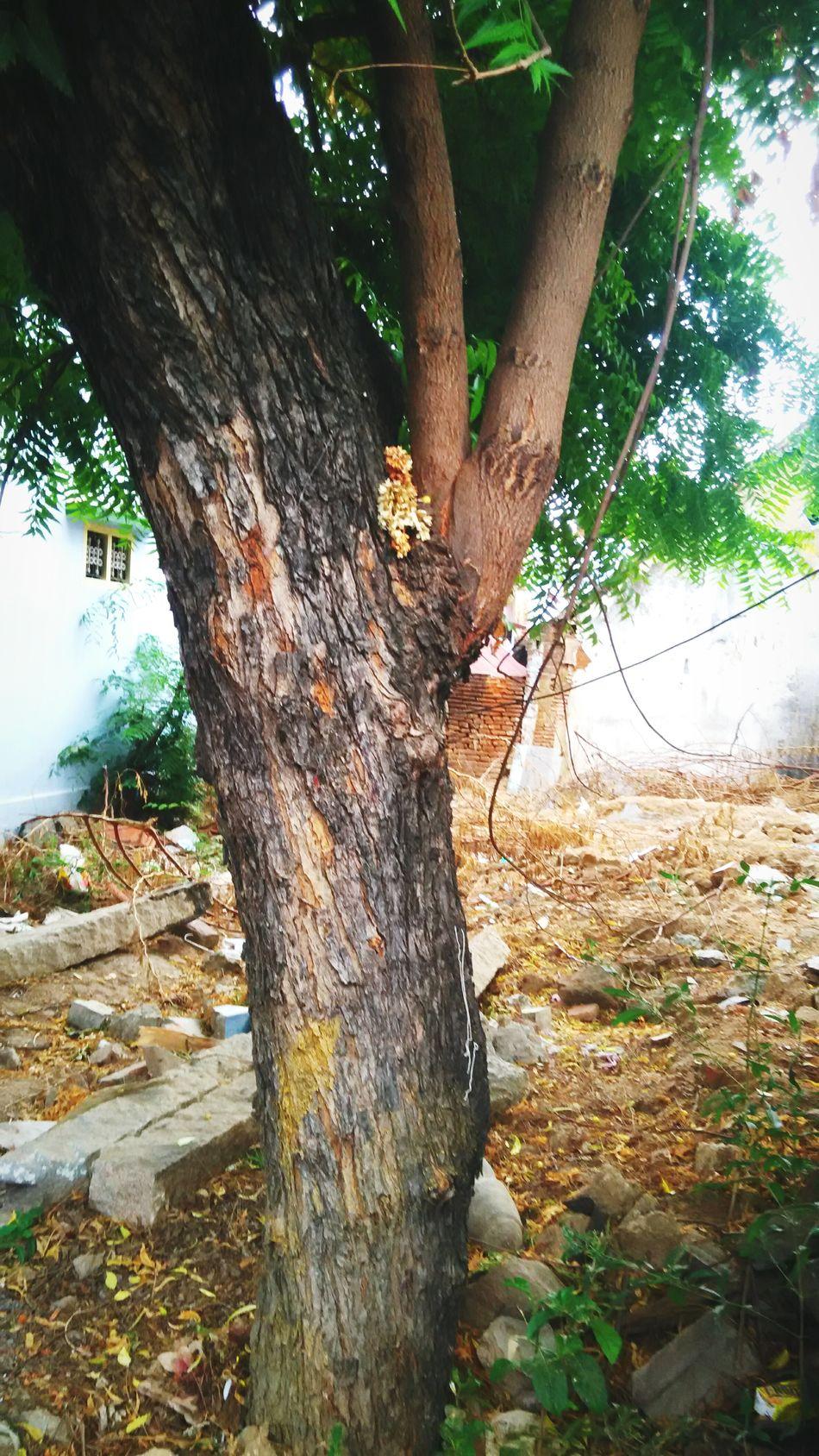 Tree, Nature, Morning, Green, God, Neem