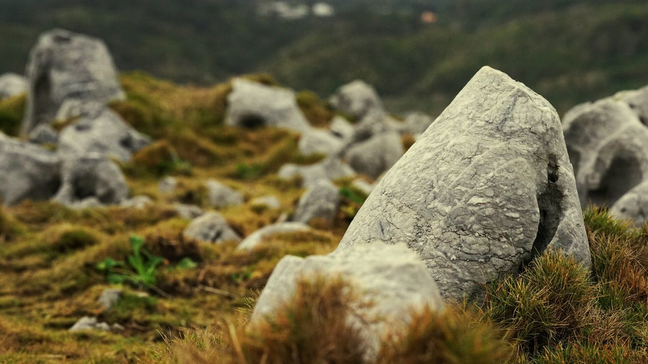 Grass Okinawa EyeEm Nature Lover Stone Sonya7r Sigma 60mm Art AMPt - My Perspective Tymccl