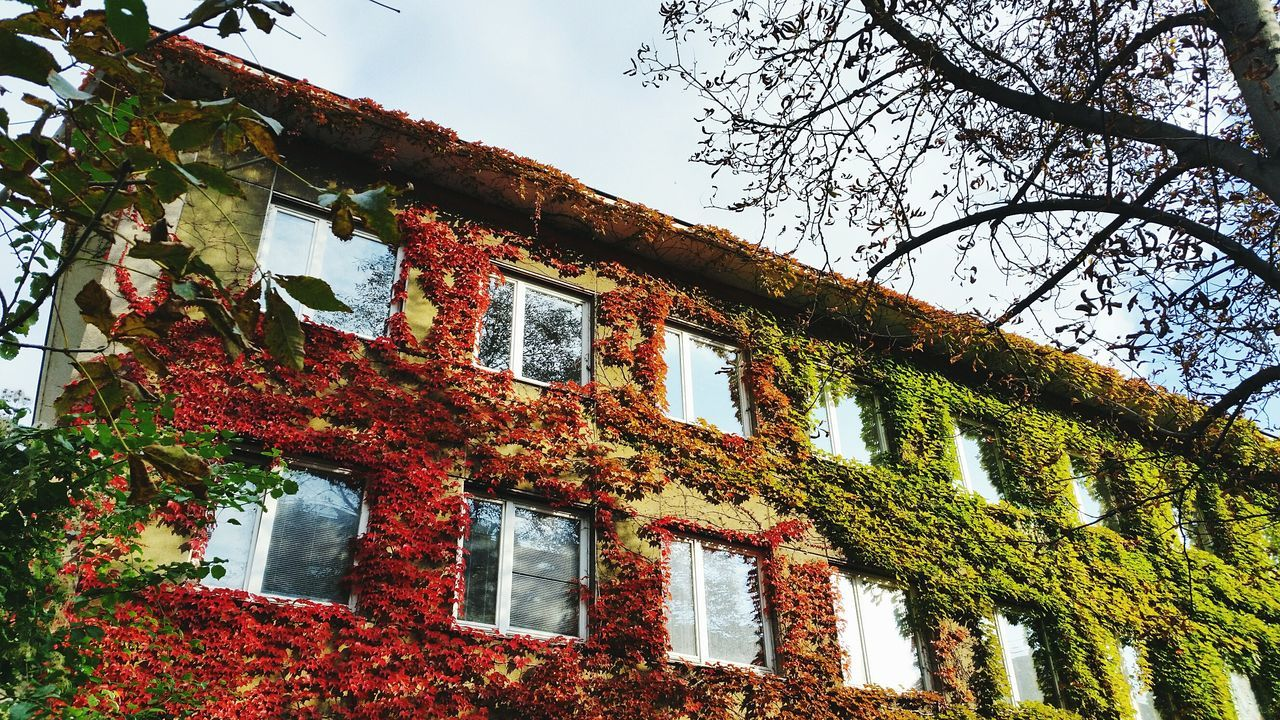 Building Exterior Ivy Covered Autumn Colors Red Green Leaves Autumn Windows BYOPaper! EyeEmNewHere