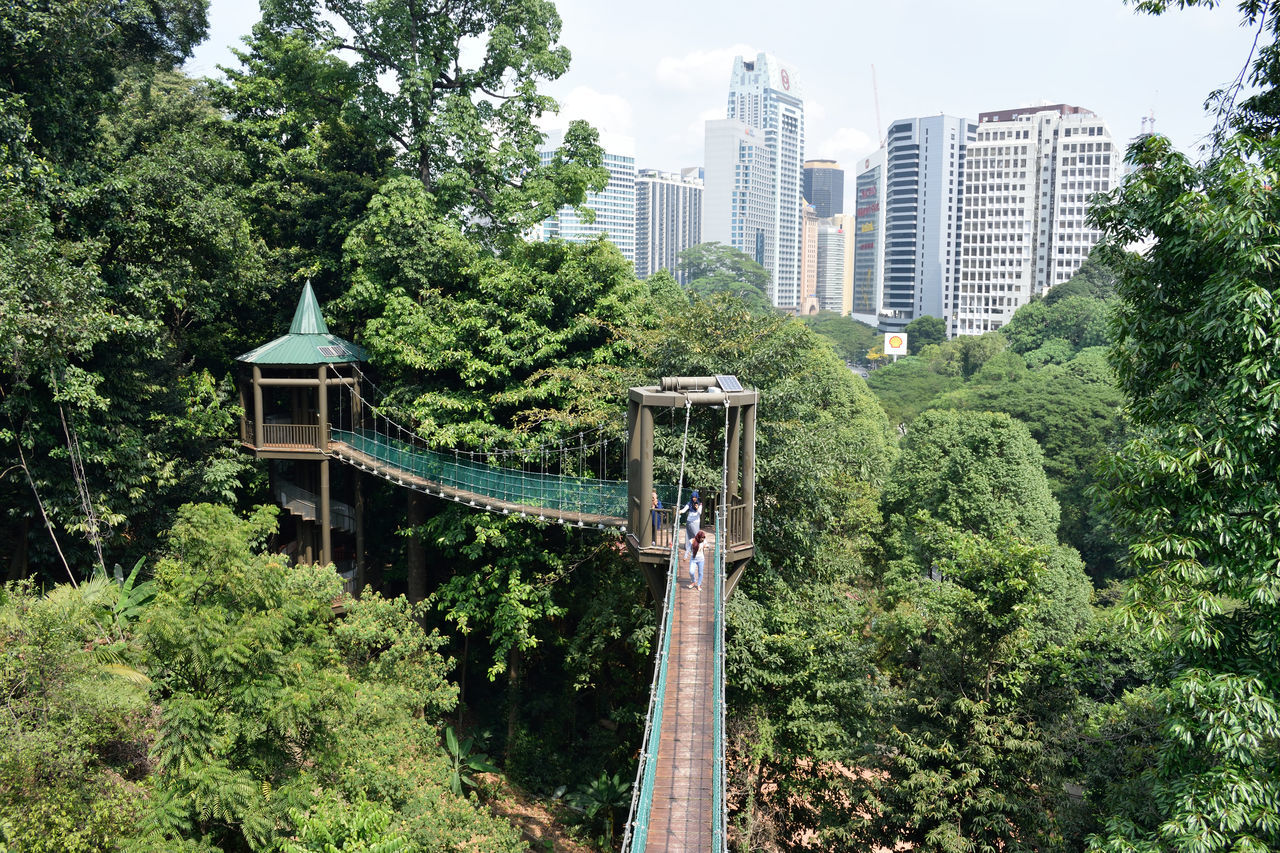 Adapted to the City Architecture Green color Tree building exterior City built structure skyscraper Growth Low angle view apartment no people Modern outdoors urban skyline sky Cityscape day Nature bridge hanging bridge Nature in the city Green city Kuala Lumpur malaysia