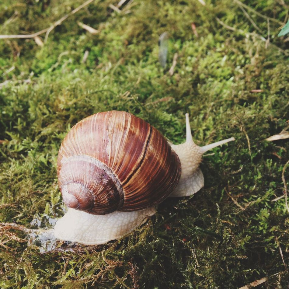 Apple Snail Close-up Escargot Iphone5C Moss Nature Snail VSCO EyeEmNewHere