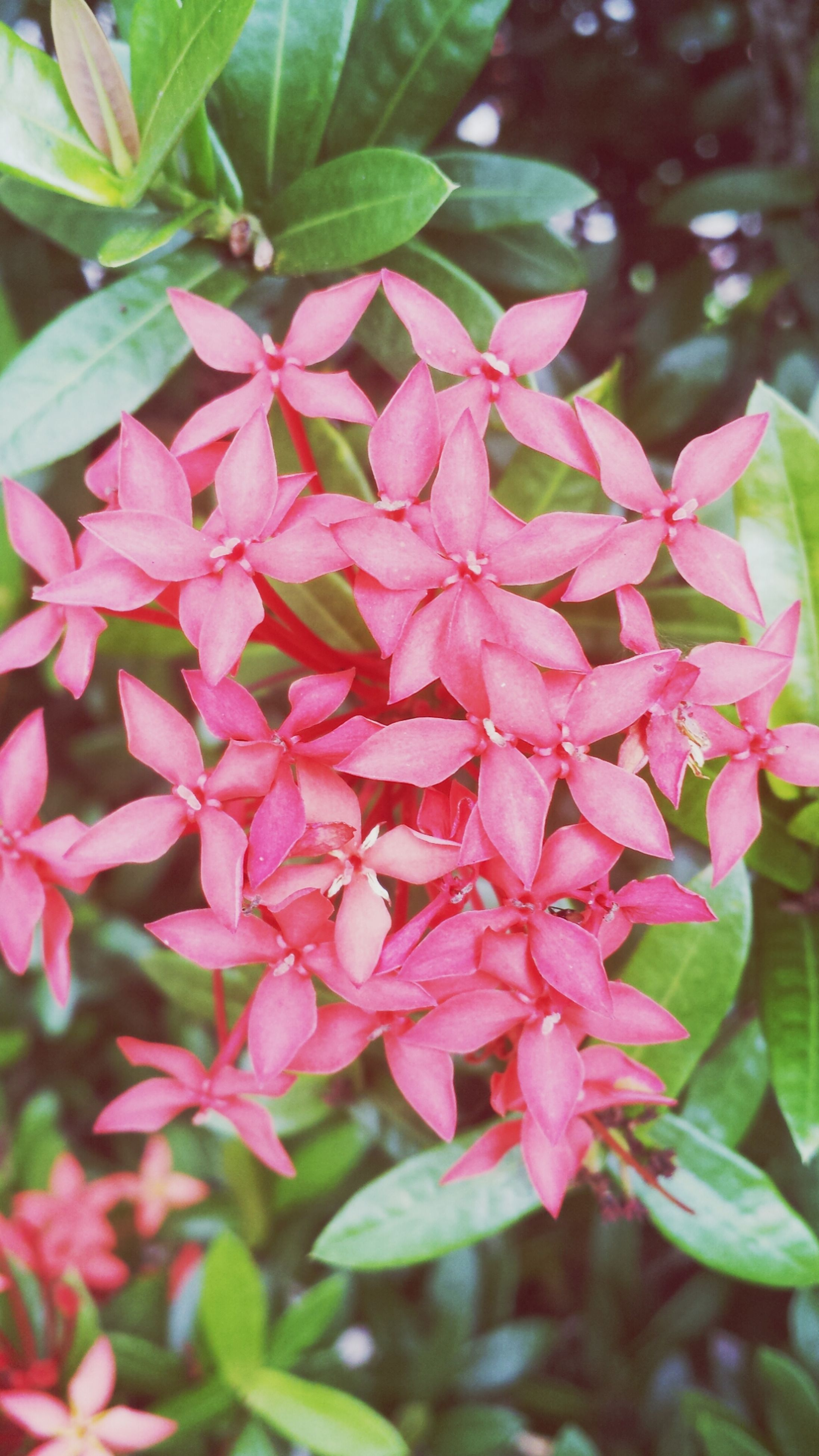 flower, growth, leaf, freshness, pink color, close-up, beauty in nature, fragility, nature, plant, focus on foreground, petal, pink, outdoors, day, green color, blooming, no people, selective focus, park - man made space