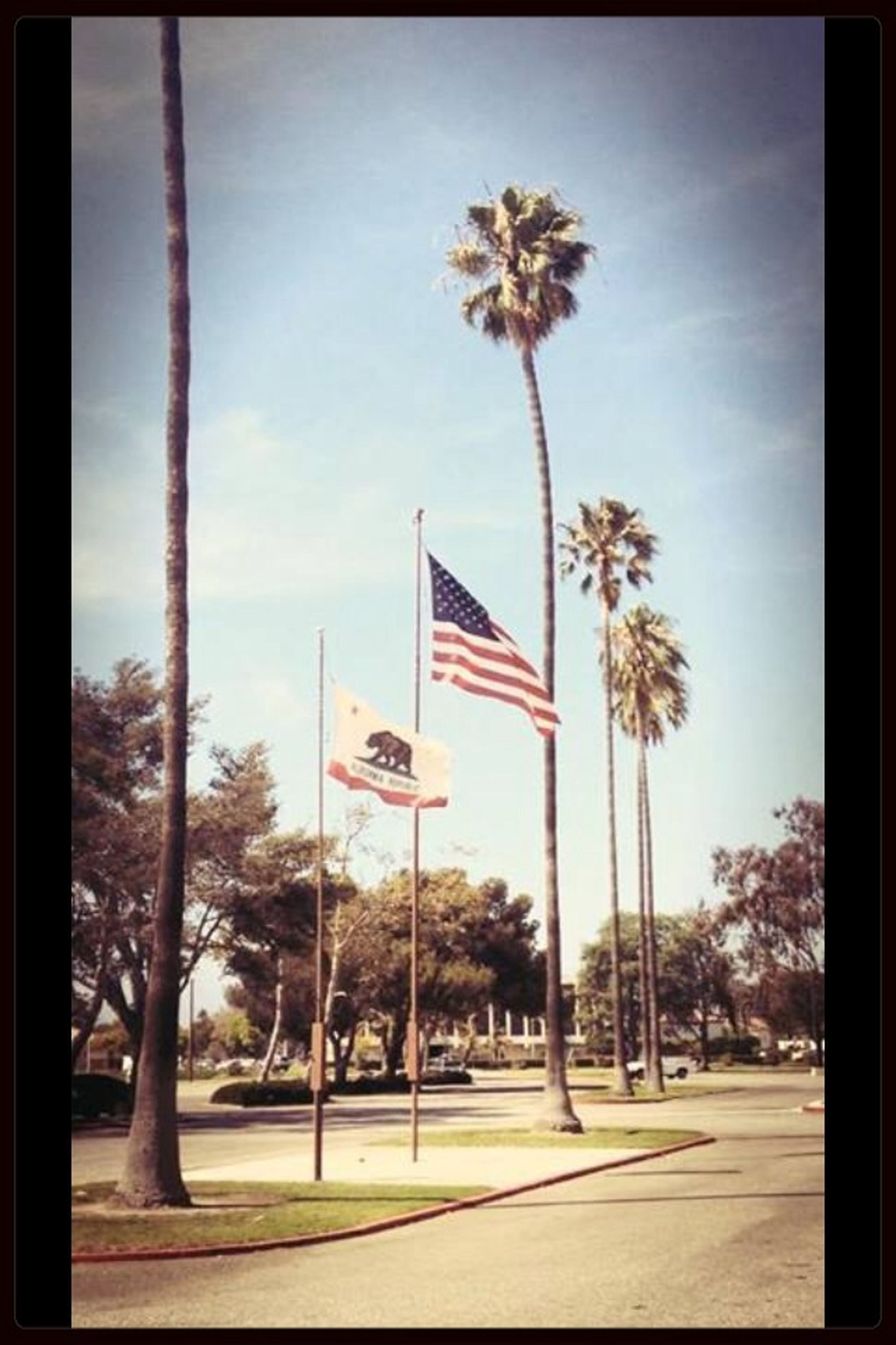 tree, transfer print, sky, flag, palm tree, patriotism, auto post production filter, road, identity, cloud, tree trunk, national flag, pole, sunlight, american flag, day, the way forward, growth, built structure, outdoors