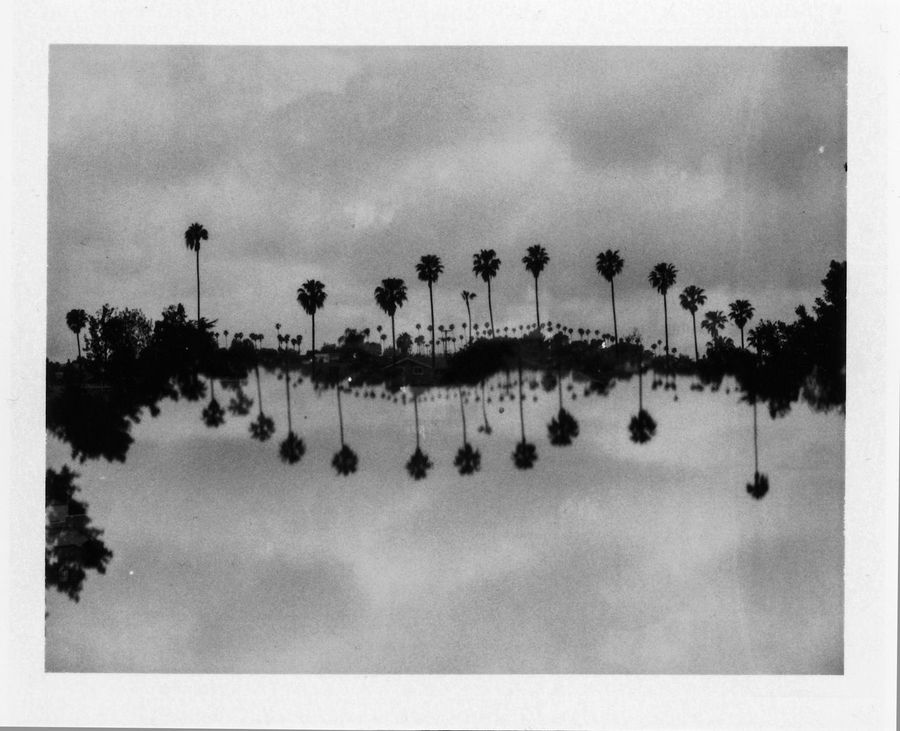 Calm Experiments In Double Exposure Lake Lakeshore Los Angeles, California Mystery Outdoors Packfilm Palm Trees Photography Tricks Polaroid Reflection Silhouette Tranquil Scene Tree Upside Down