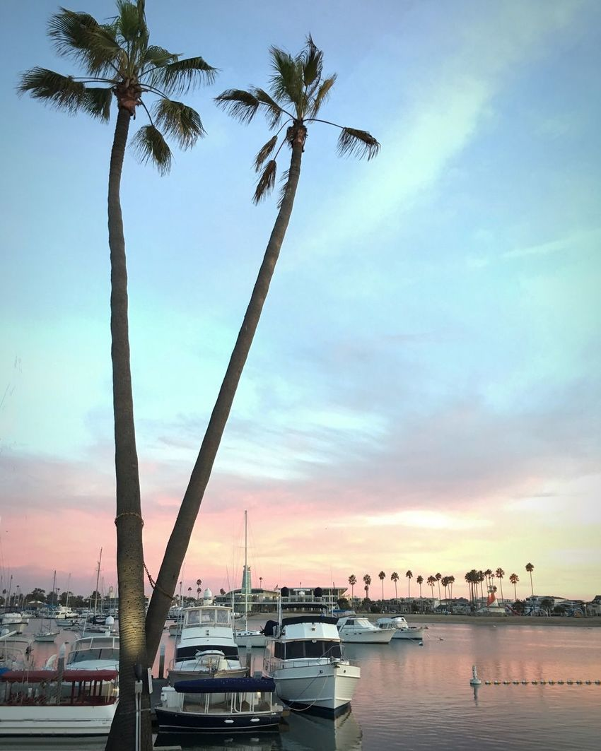 Sunset pastels Palm Tree Nautical Vessel Boat Moored Sky Tranquil Scene Harbor Marina Cloud Outdoors Sunset_collection The Colors Of The Sky