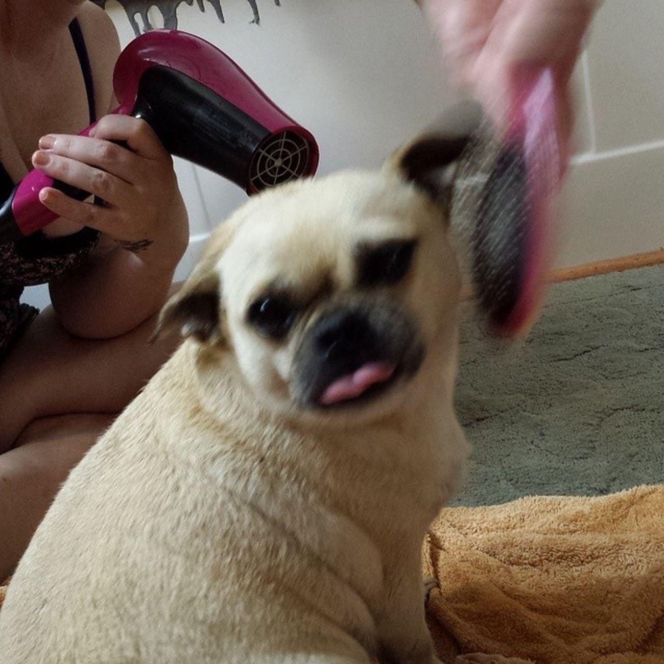 Such a love bug Bathtime Pug Chug