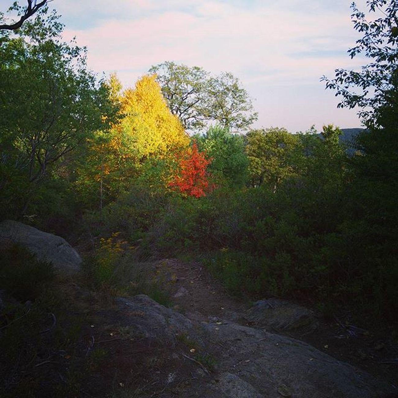 First fall colors?? Summersunset Bearmountain Light Shadow