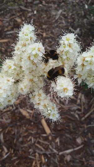 Photography The Week Of Eyeem Pleasant Day Nature Eyeemphoto Flower Bee 🐝