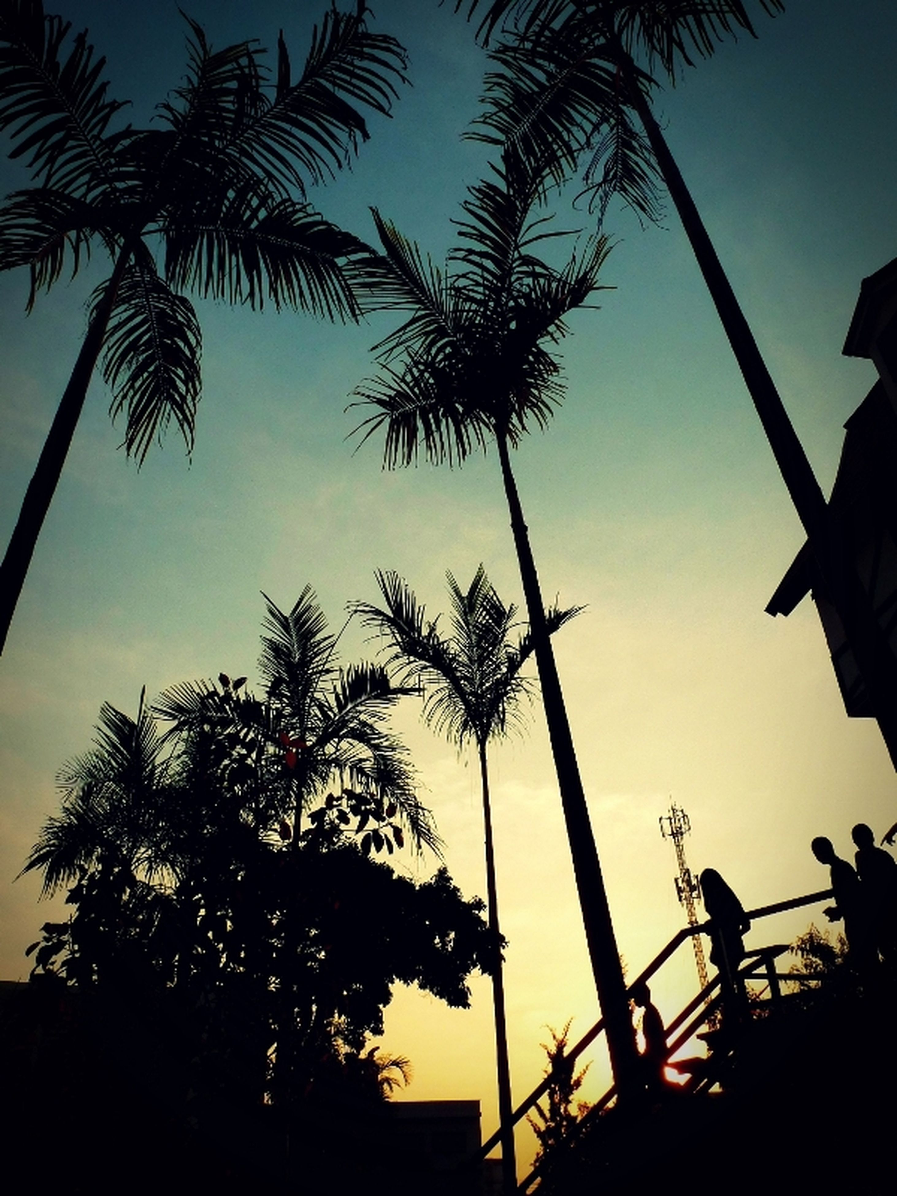 silhouette, low angle view, tree, sunset, sky, clear sky, outline, men, leisure activity, palm tree, dusk, nature, outdoors, lifestyles, sunlight, street light, built structure, copy space, unrecognizable person