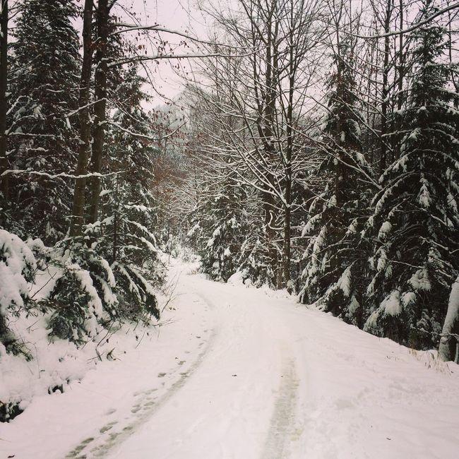 Snow Winter Samerberg Cold Days Dog❤ Maschaliebtschnee