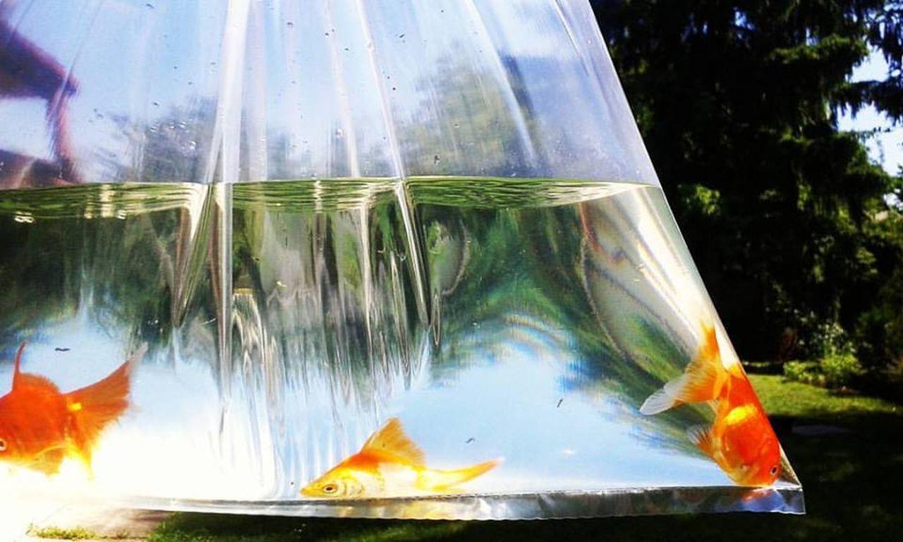 Fish Moody FishEyeEm Aquaristik Aquarium Life Aqua