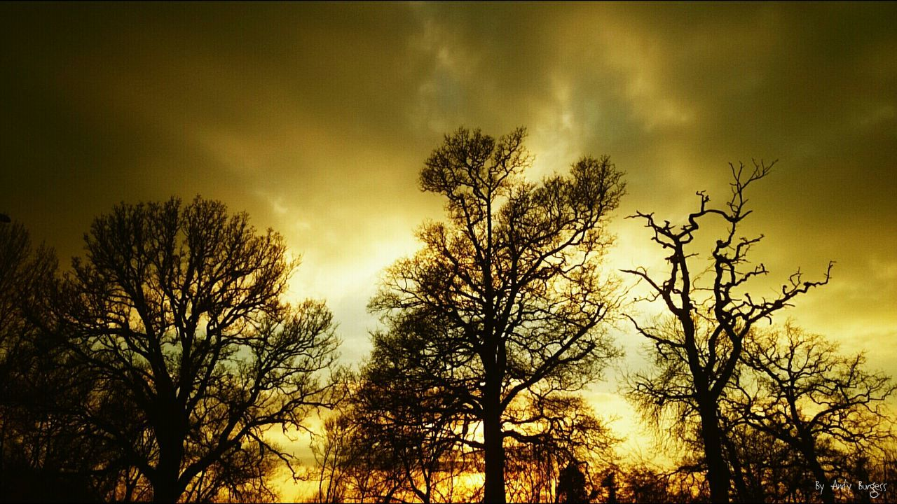tree, sky, nature, sunset, growth, silhouette, beauty in nature, low angle view, outdoors, no people, branch, day