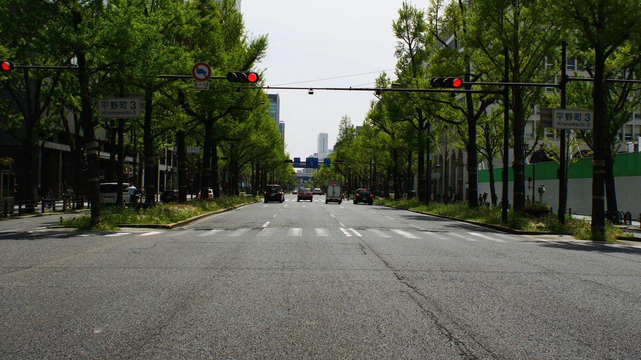Tree Outdoors Day City Sky City Takumar 28mm F3.5 Nex5 City Life
