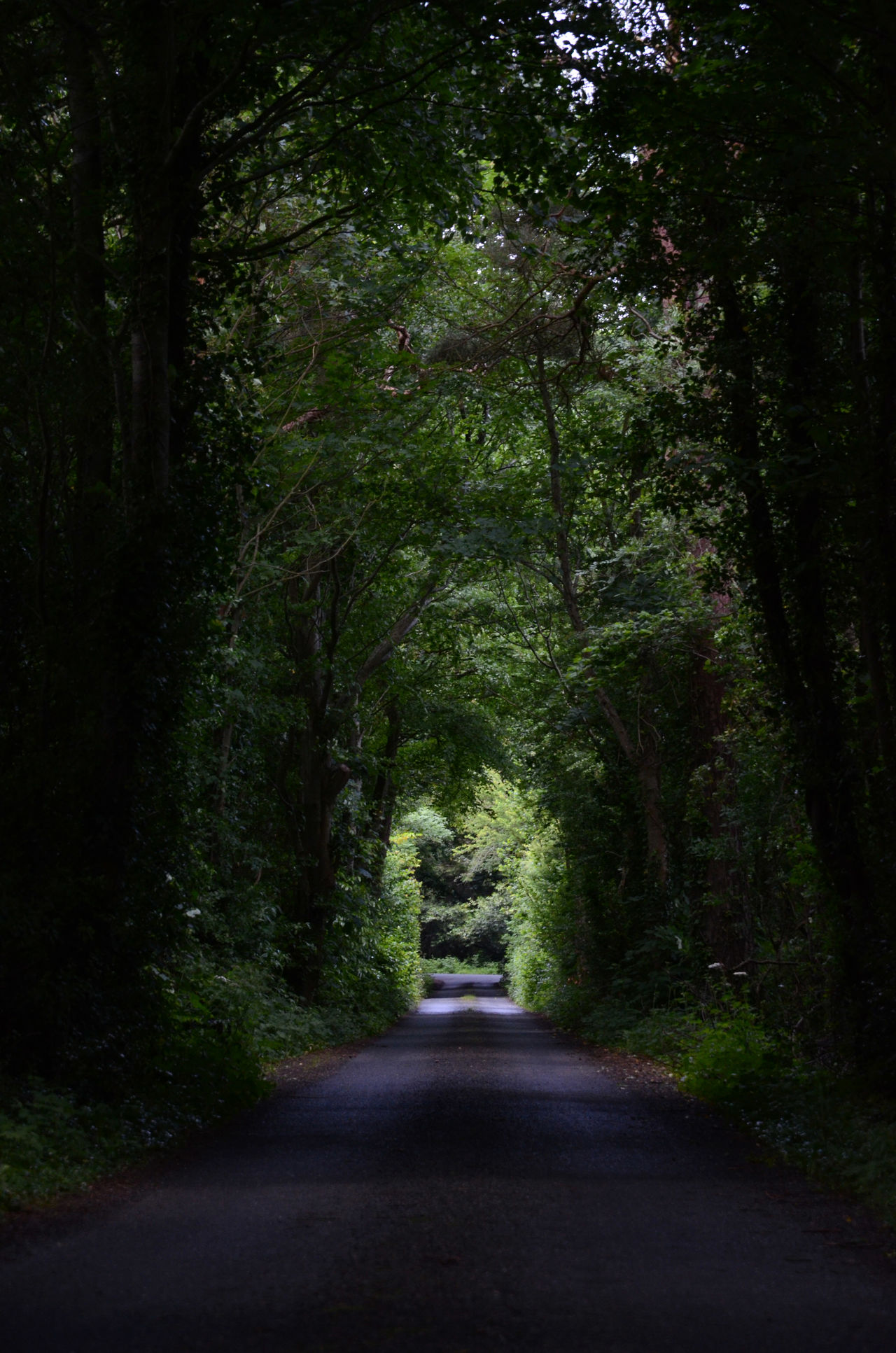 Dark Forest Outdoors Road The Way Forward Tree Tunnel