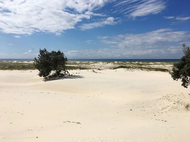 Beach Beach Sand Sky Nature Beauty In Nature Tranquility Tranquil Scene Scenics Sea Tree Water Cloud - Sky Day Horizon Over Water Outdoors No People island Stradbroke Island Queensland
