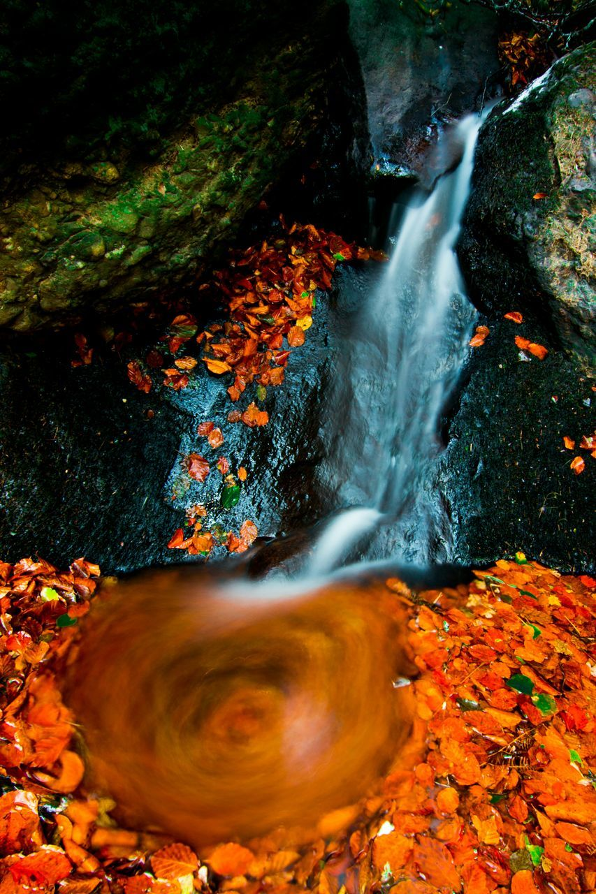 orange color, motion, nature, beauty in nature, water, change, autumn, blurred motion, no people, waterfront, leaf, long exposure, outdoors, high angle view, tranquility, day, scenics, tree, forest, close-up, animal themes