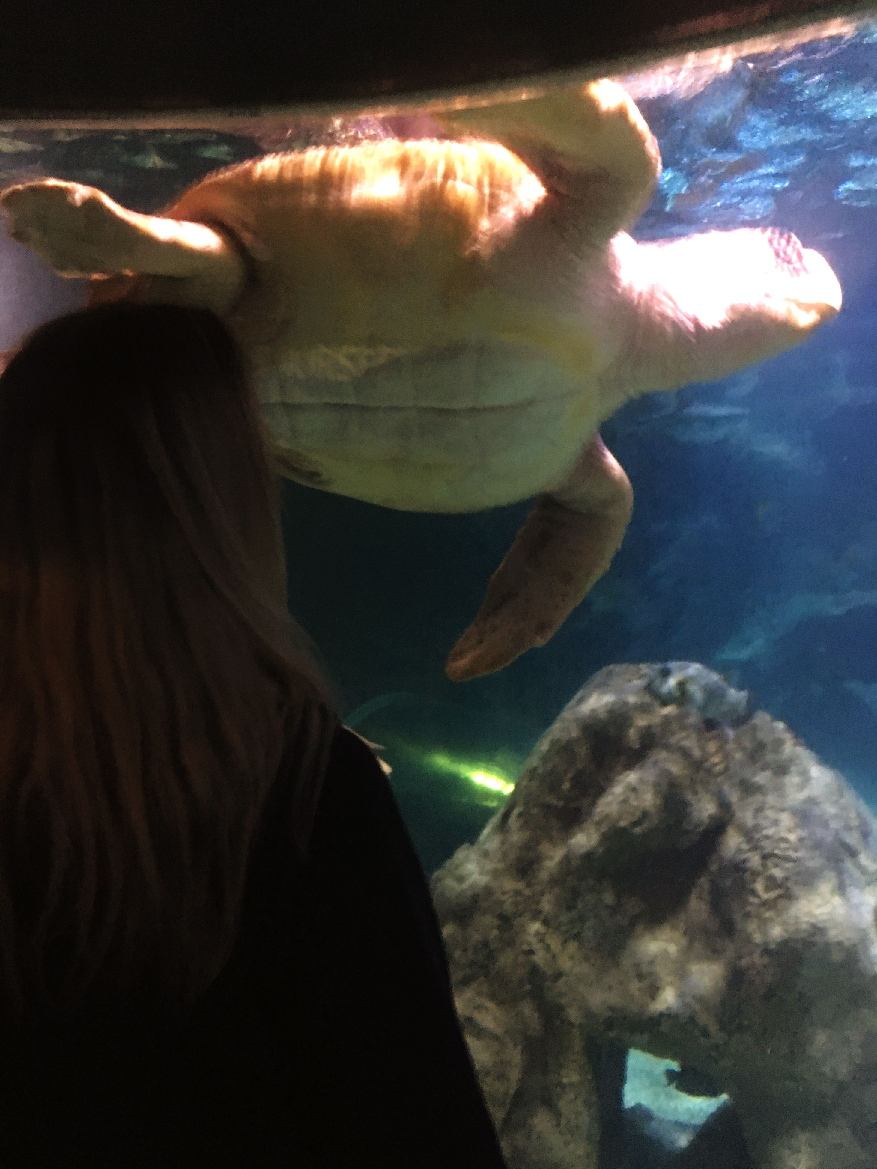 one animal, sea life, real people, water, underwater, fish, aquarium, swimming, indoors, animals in the wild, one person, rear view, nature, close-up, women, day, beauty in nature, undersea, people
