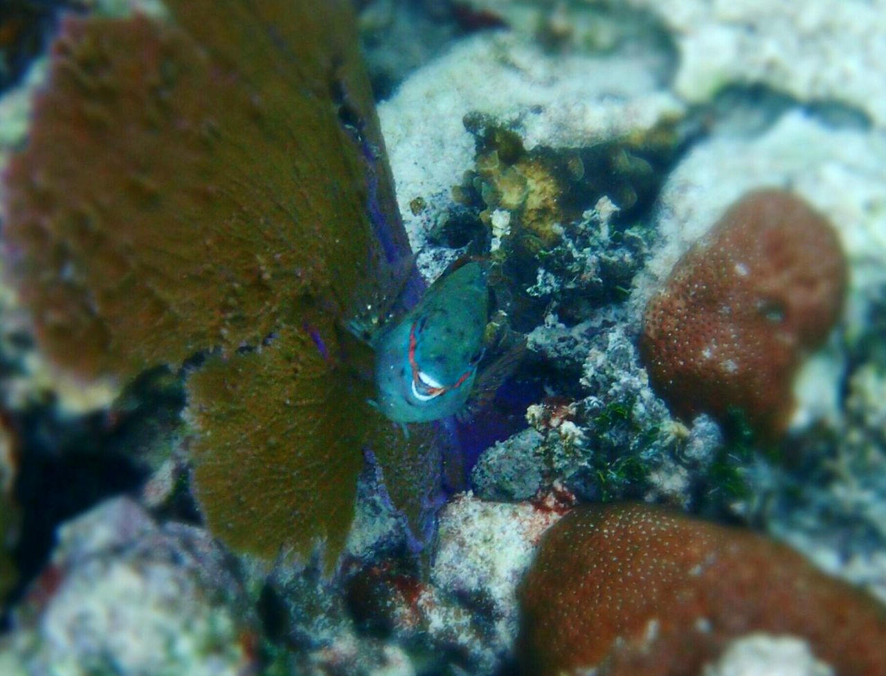 underwater, undersea, sea life, one animal, animal themes, animals in the wild, sea, no people, animal wildlife, coral, fish, close-up, nature, water, beauty in nature, camouflage, day, outdoors