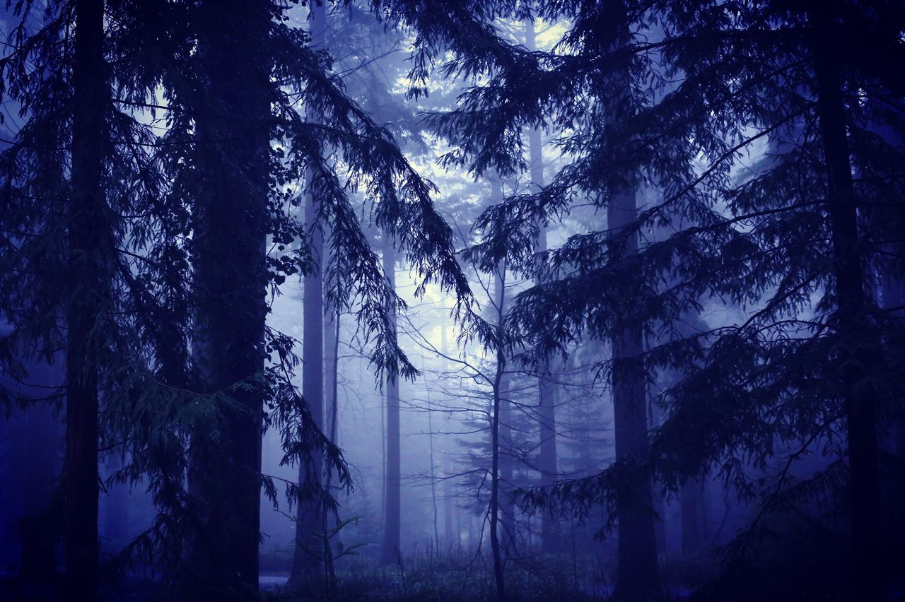tree, forest, nature, no people, beauty in nature, tranquil scene, tranquility, landscape, day, tree trunk, outdoors, scenics