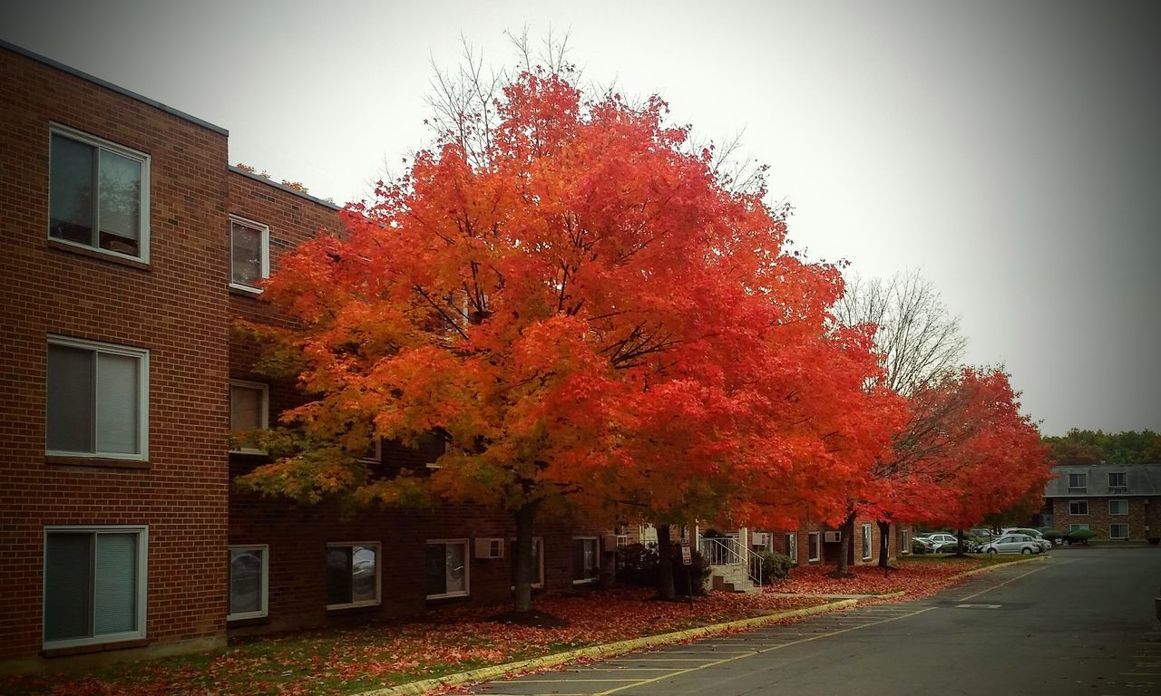 autumn, change, tree, leaf, building exterior, architecture, orange color, built structure, house, outdoors, nature, day, no people, red, maple tree, tranquility, beauty in nature, sky, clear sky, maple