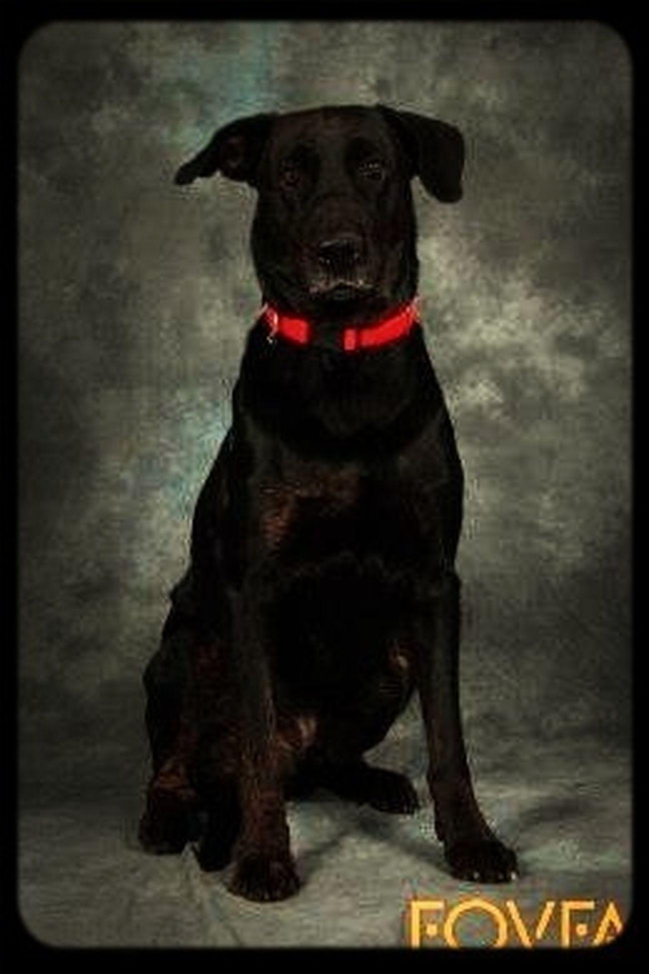 Tyson Hundarna