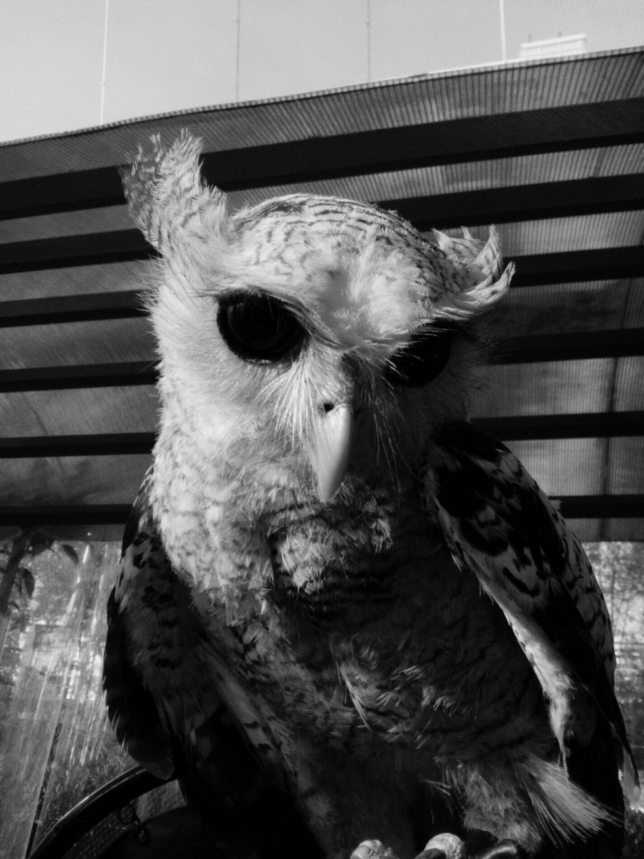 Close-up Indoors  No People One Animal Animal Themes Stuffed Day Mammal Black And White Black And White Photography Owl Ominous Owl Eyes Owl Art