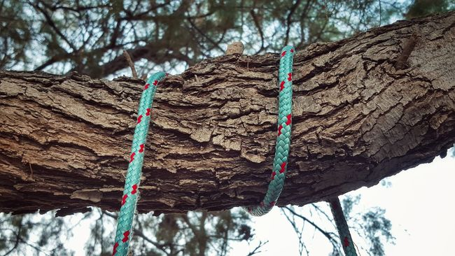 Tree Branch Rope Ropeway Look Up And Thrive From Where I Stand Textures And Surfaces Outdoors Low Angle View Strength Rough Close-up Focus On Foreground Tightrope Tree Trunk Power In Nature Rope Swing Textures Tree_collection  Selective Focus