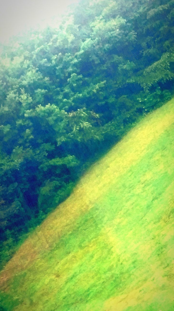 green color, nature, beauty in nature, no people, day, tranquil scene, scenics, growth, tree, outdoors, backgrounds, landscape, grass, freshness, close-up