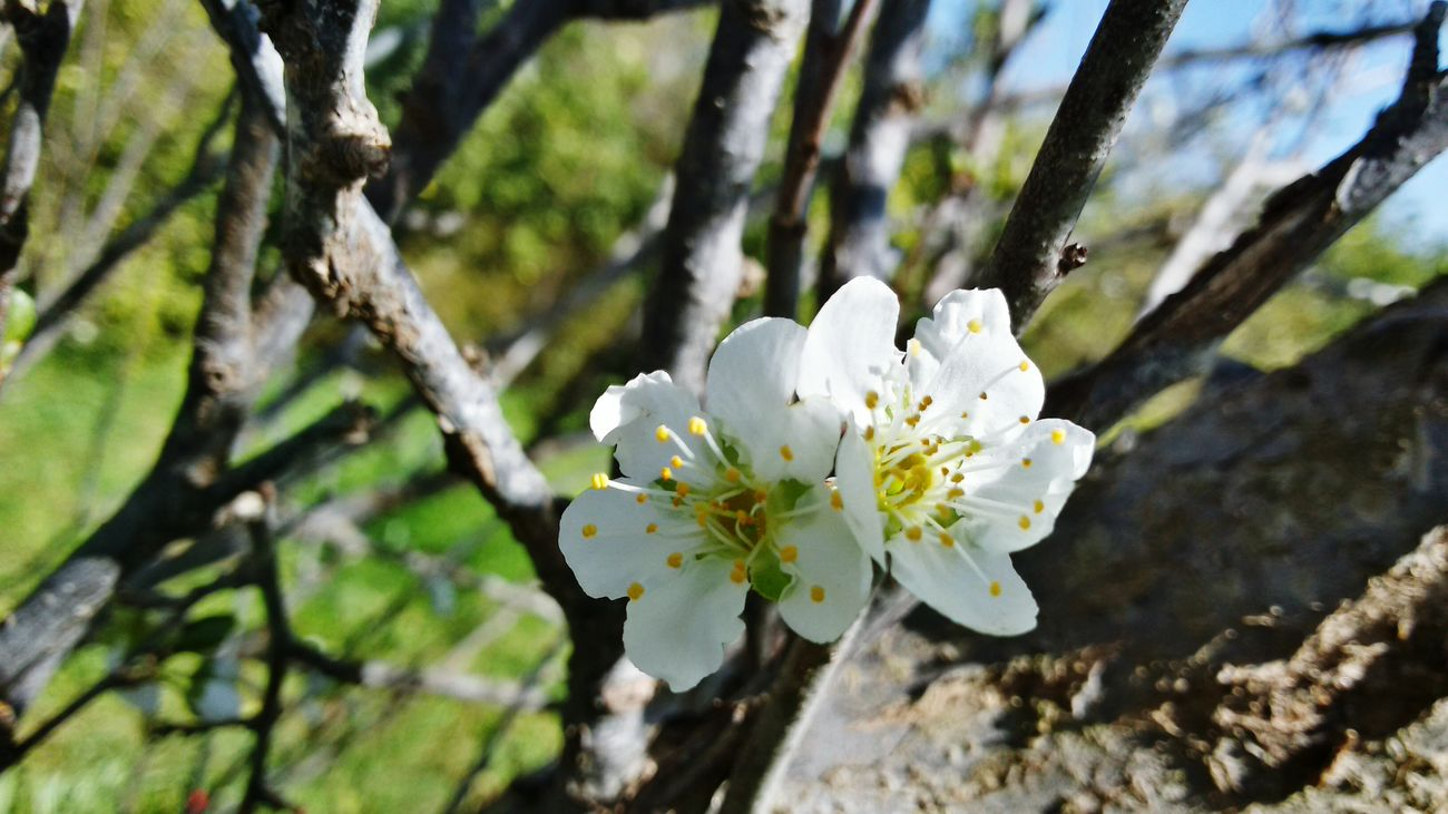 Outdoors No People Close-up Beauty In Nature My Farm Life Pulm Tree Pulm Flower