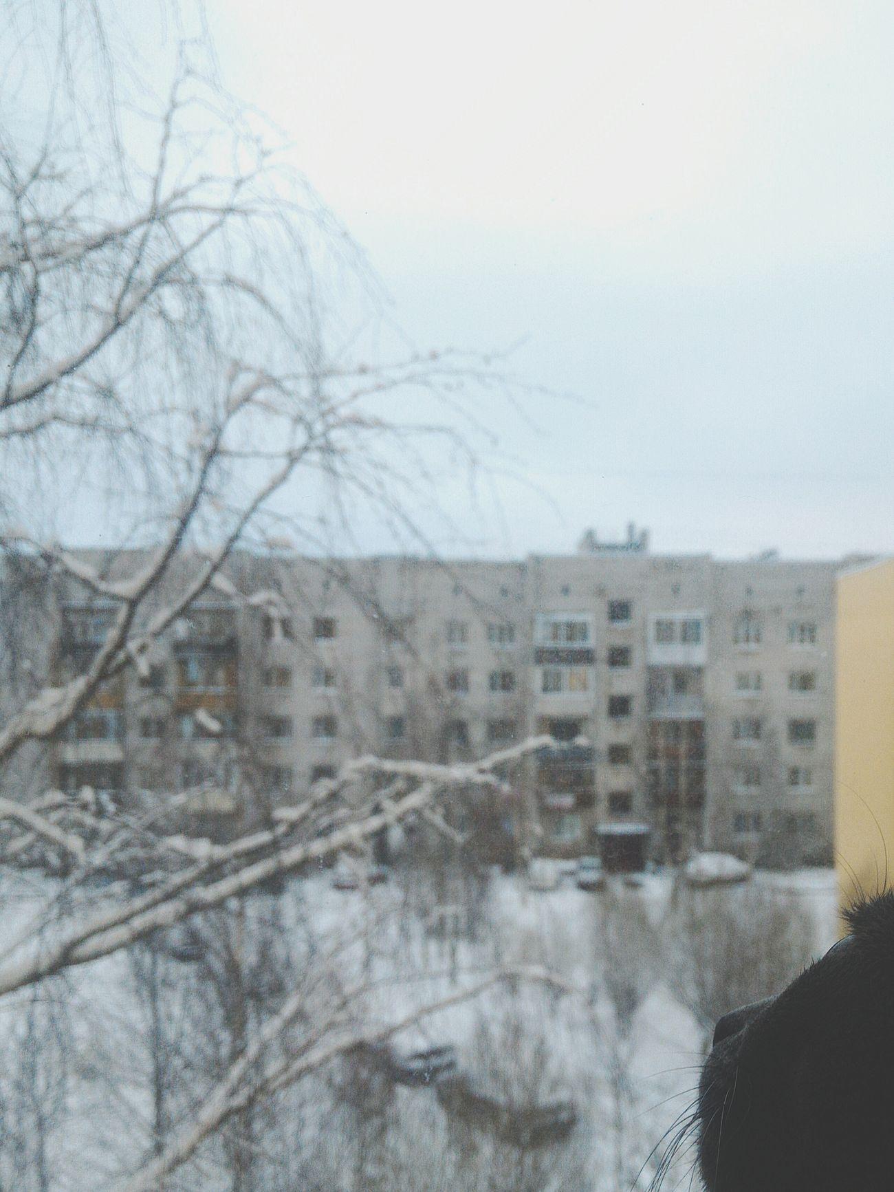 Winter Snow ❄ Snow Russianwinter Cold ❄