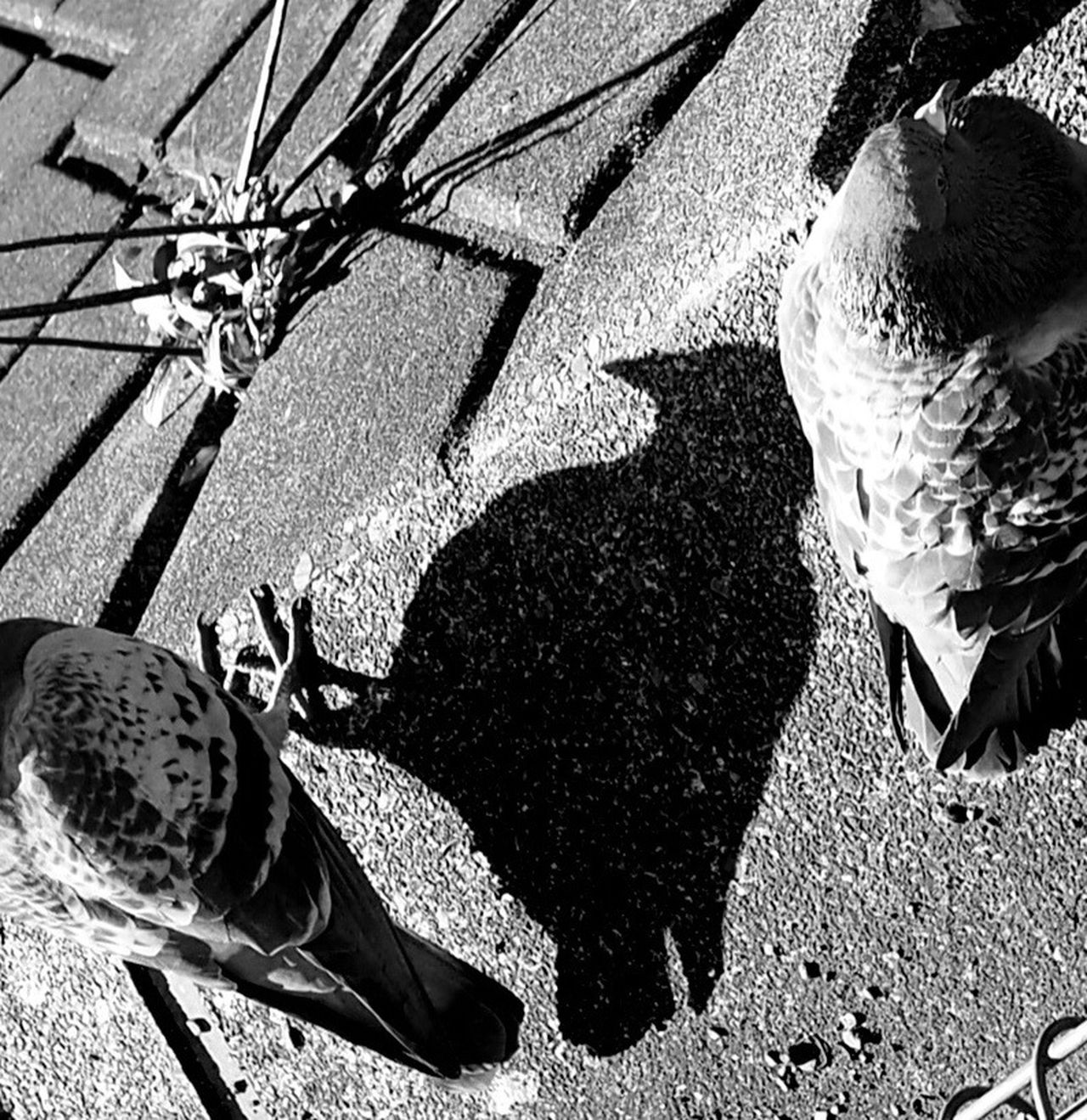 Tokyo,Japan Bird Of Tokyo Bird EyeEm Birds Birds